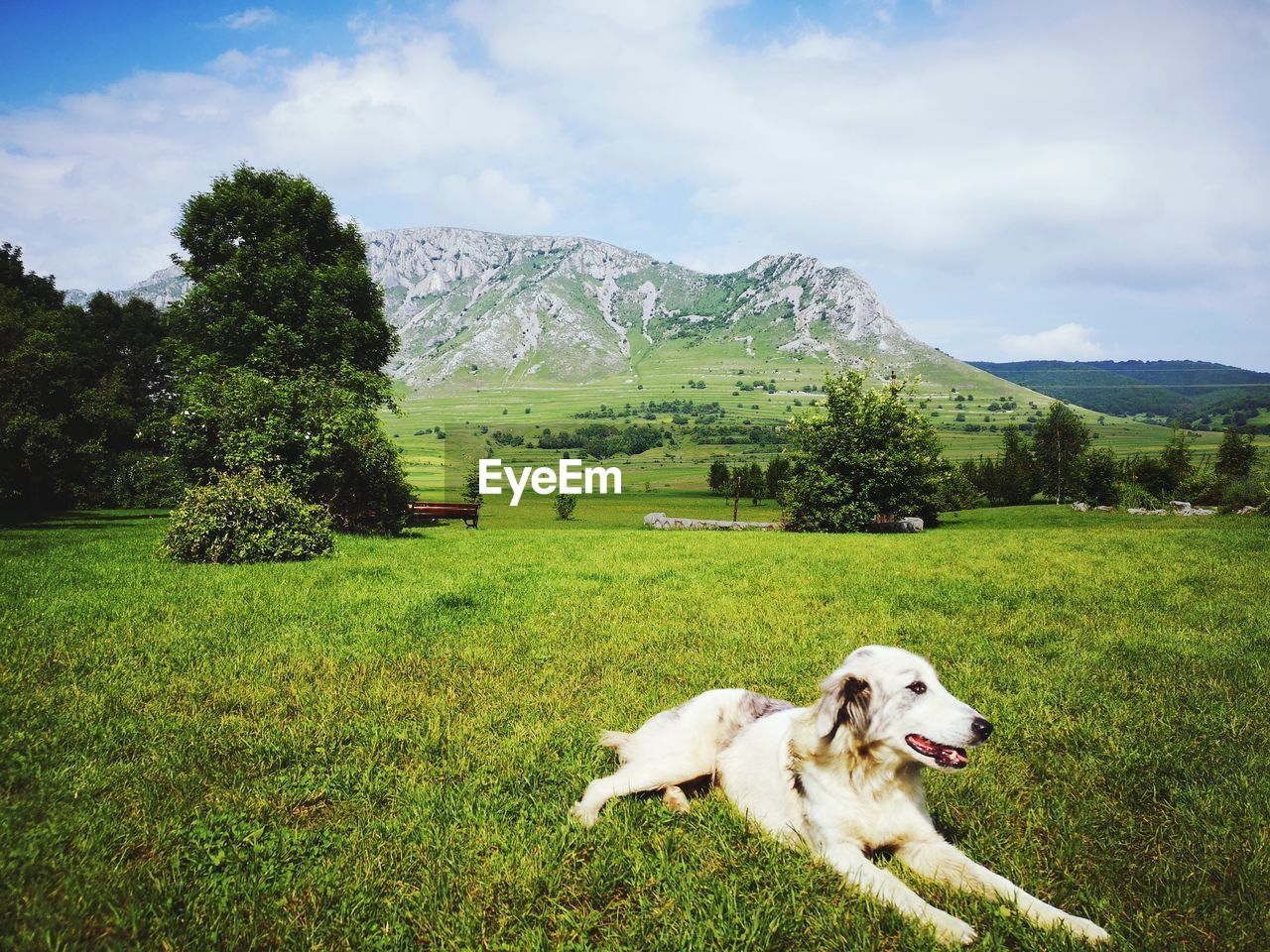 domestic, pets, domestic animals, mammal, one animal, plant, dog, animal themes, canine, animal, mountain, grass, vertebrate, cloud - sky, sky, tree, land, green color, beauty in nature, day, no people, mountain range, outdoors, mouth open