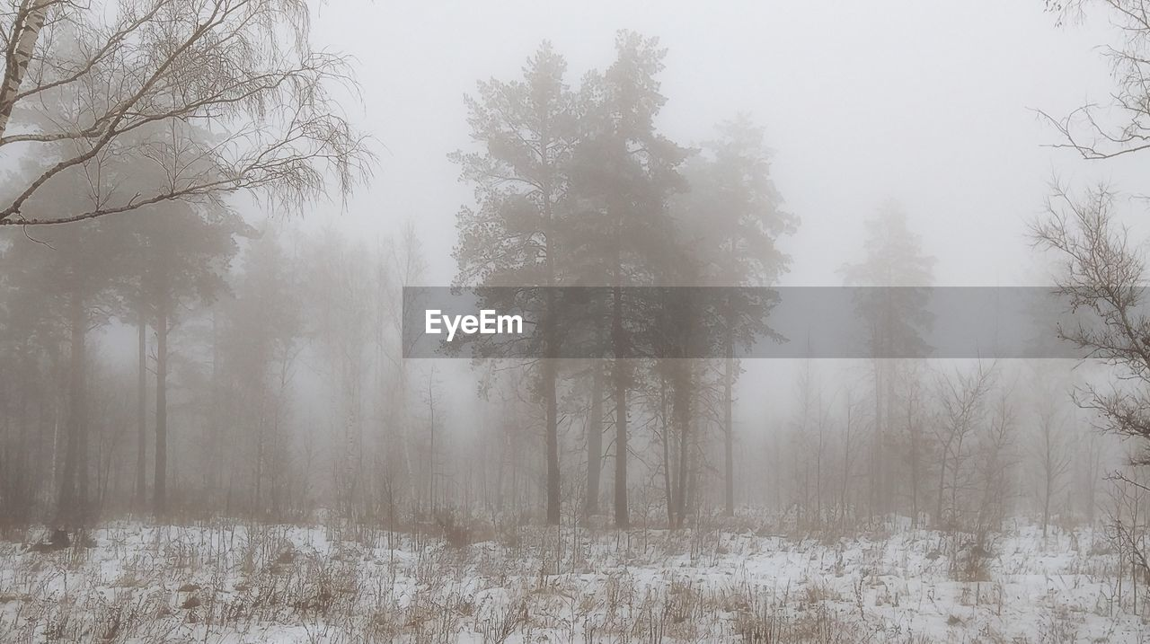 tree, nature, fog, cold temperature, winter, snow, tranquil scene, beauty in nature, landscape, forest, tranquility, mist, weather, no people, hazy, growth, scenics, day, outdoors, bare tree, sky