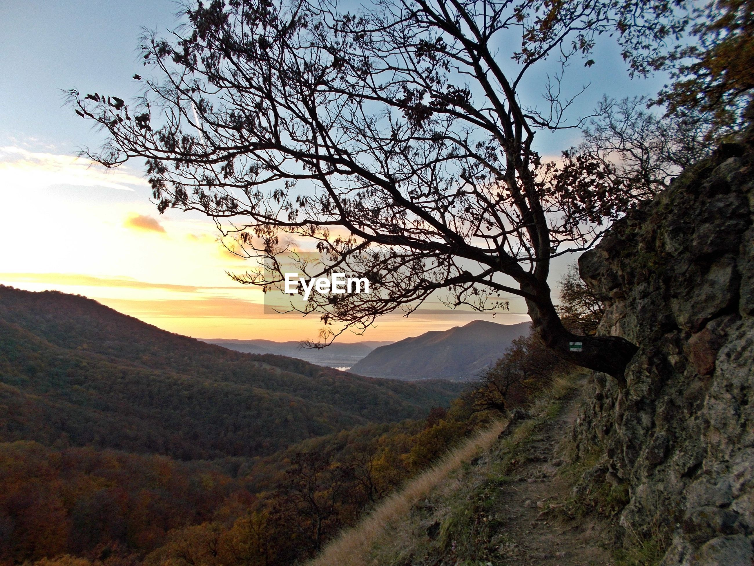 tree, sunset, nature, beauty in nature, sky, landscape, tranquility, scenics, outdoors, growth, tranquil scene, mountain, no people, day