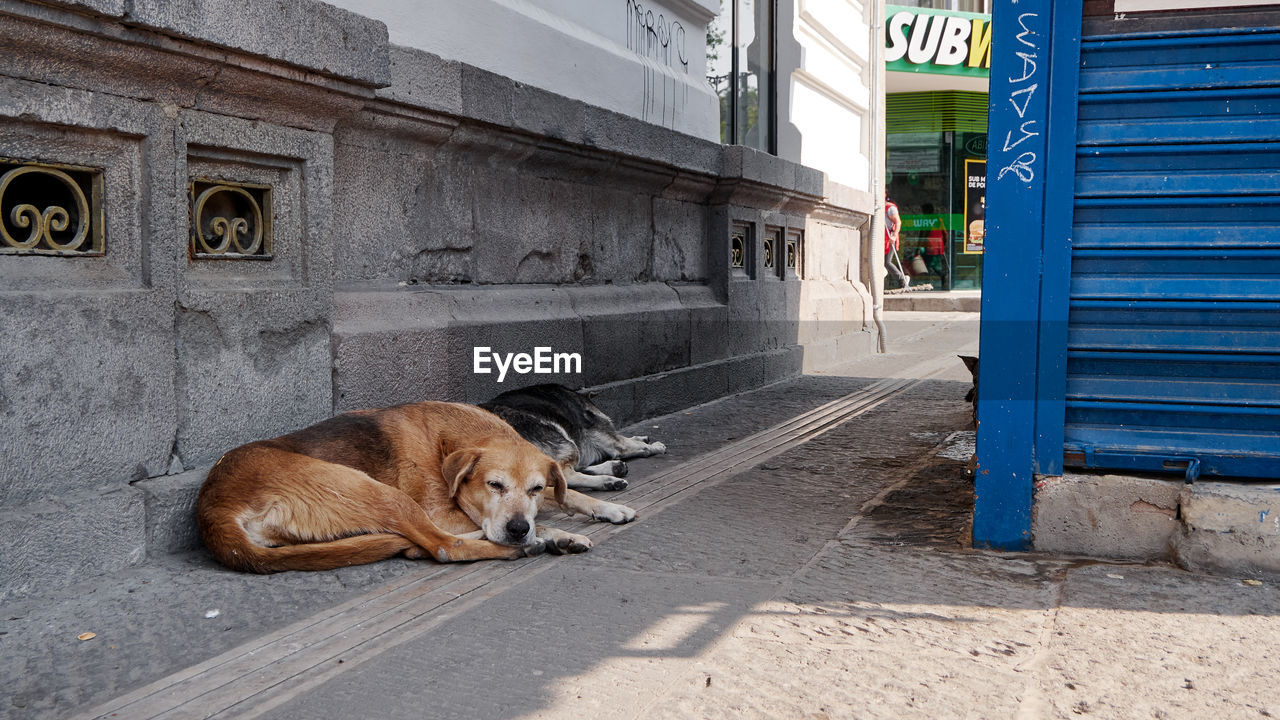PORTRAIT OF A DOG RESTING