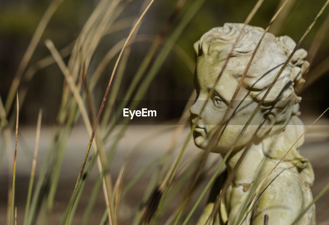 close-up, no people, statue, focus on foreground, outdoors, one animal, sculpture, day, nature, grass, animal themes