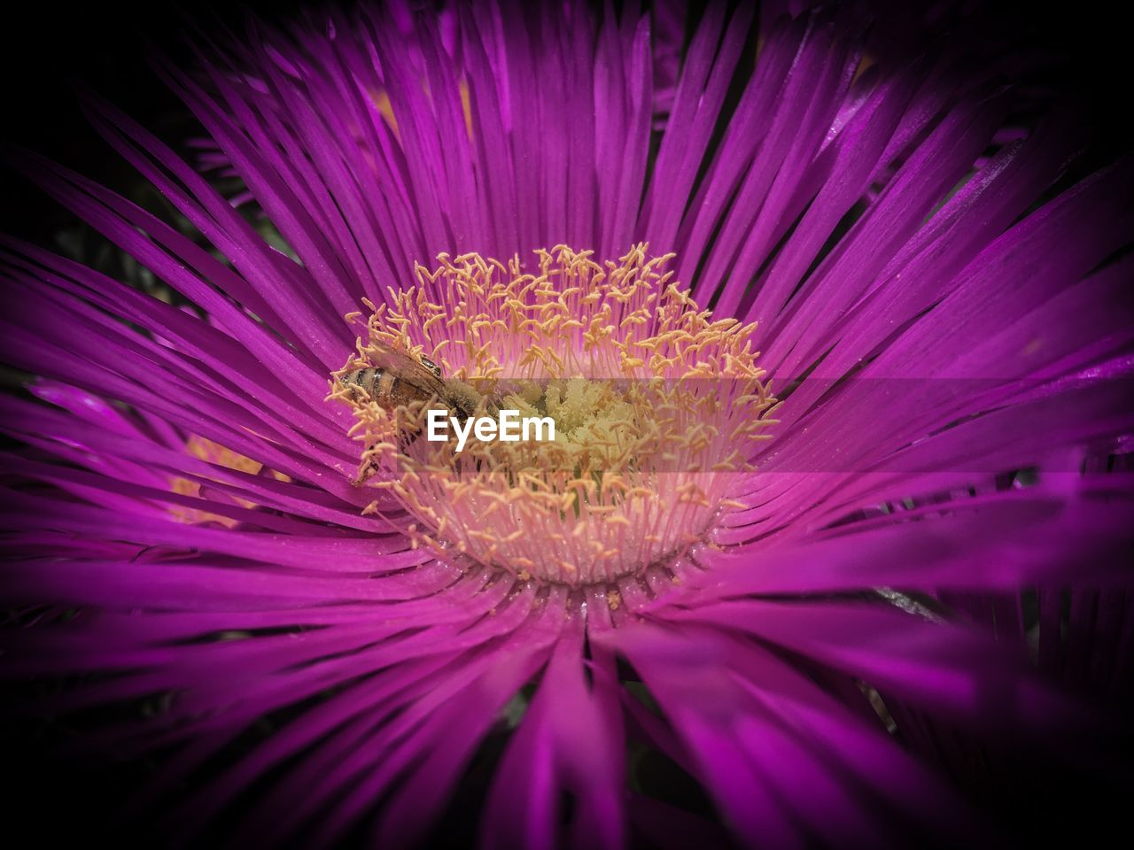 flower, flower head, petal, purple, fragility, pollen, growth, beauty in nature, nature, close-up, freshness, no people, stamen, plant, pink color, outdoors, blooming, day, passion flower
