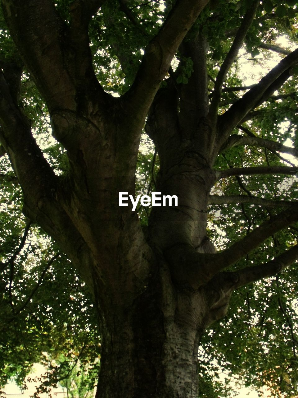 tree, tree trunk, growth, nature, day, outdoors, low angle view, forest, branch, no people, beauty in nature