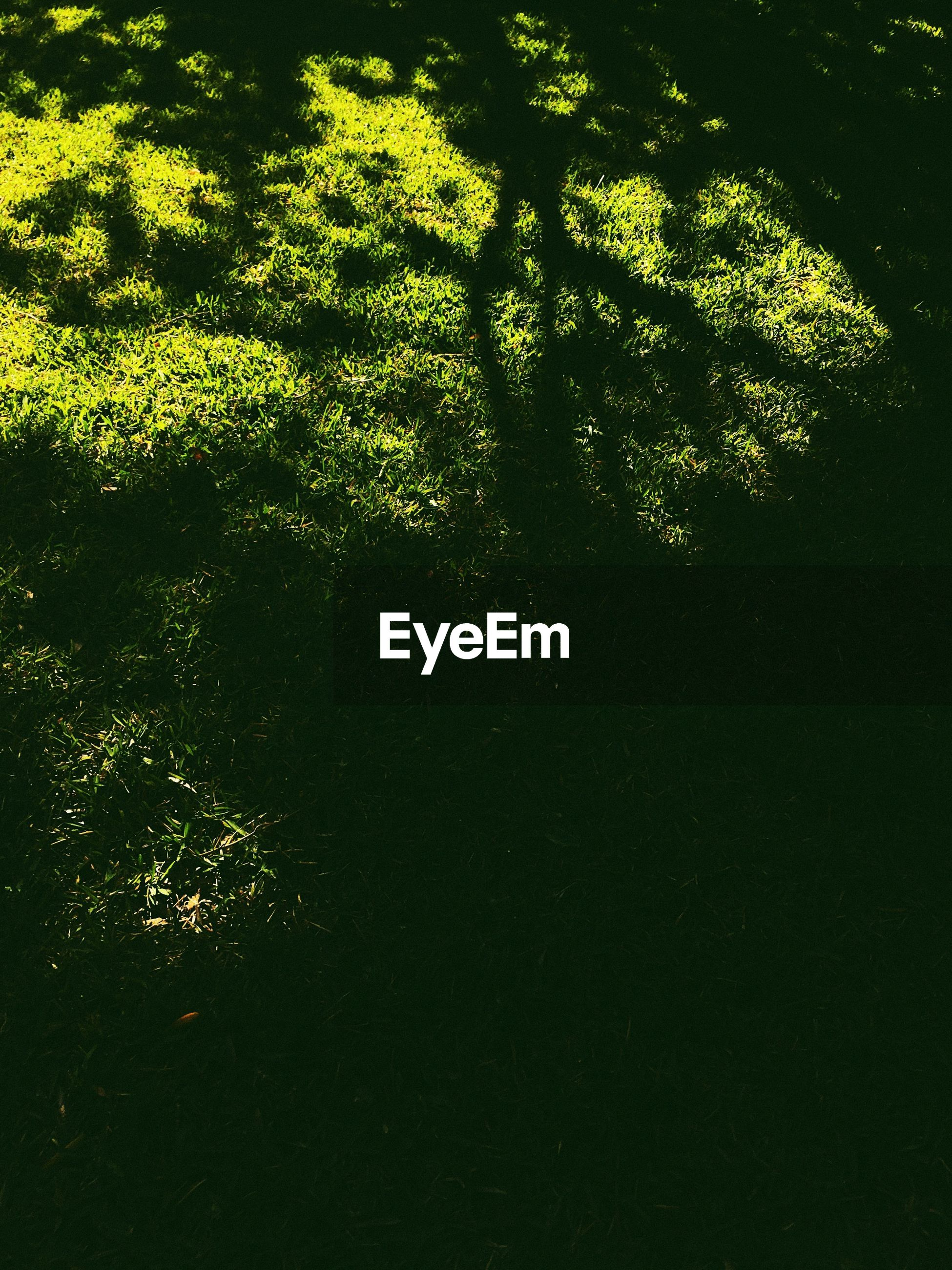 HIGH ANGLE VIEW OF TREES ON GRASS
