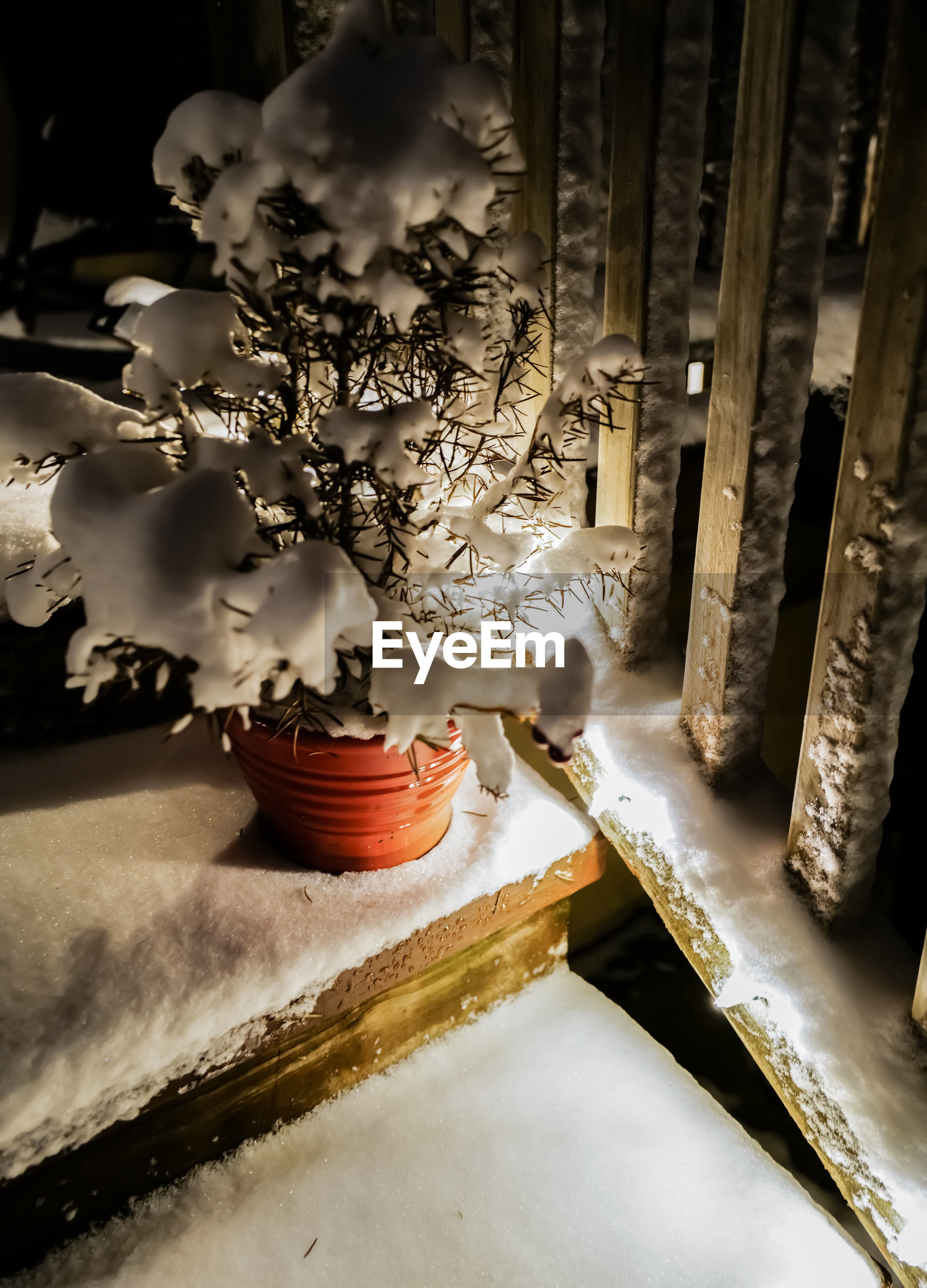 Fresh snow on plant and wooden steps with lights at night