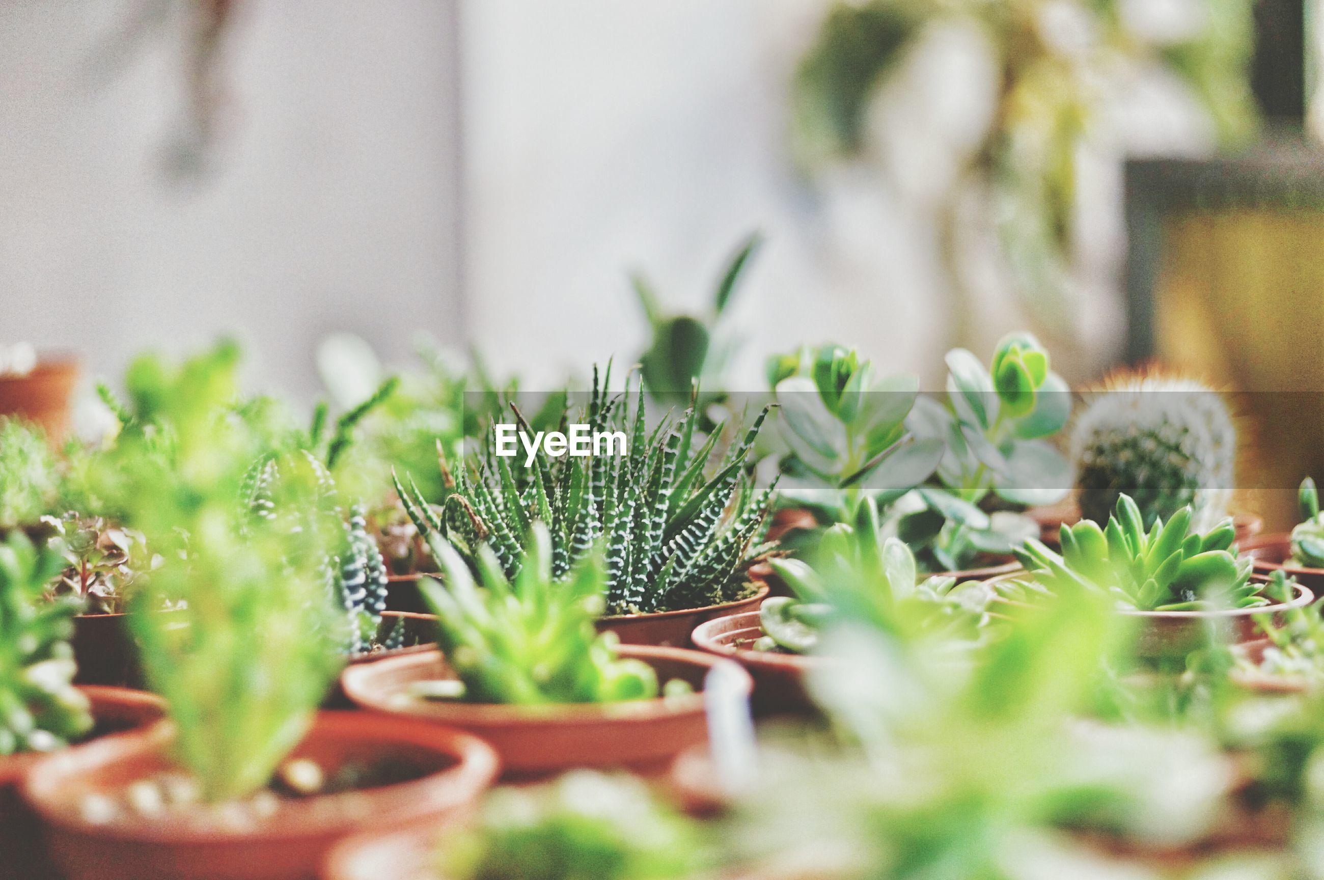 Close-up of pot plants