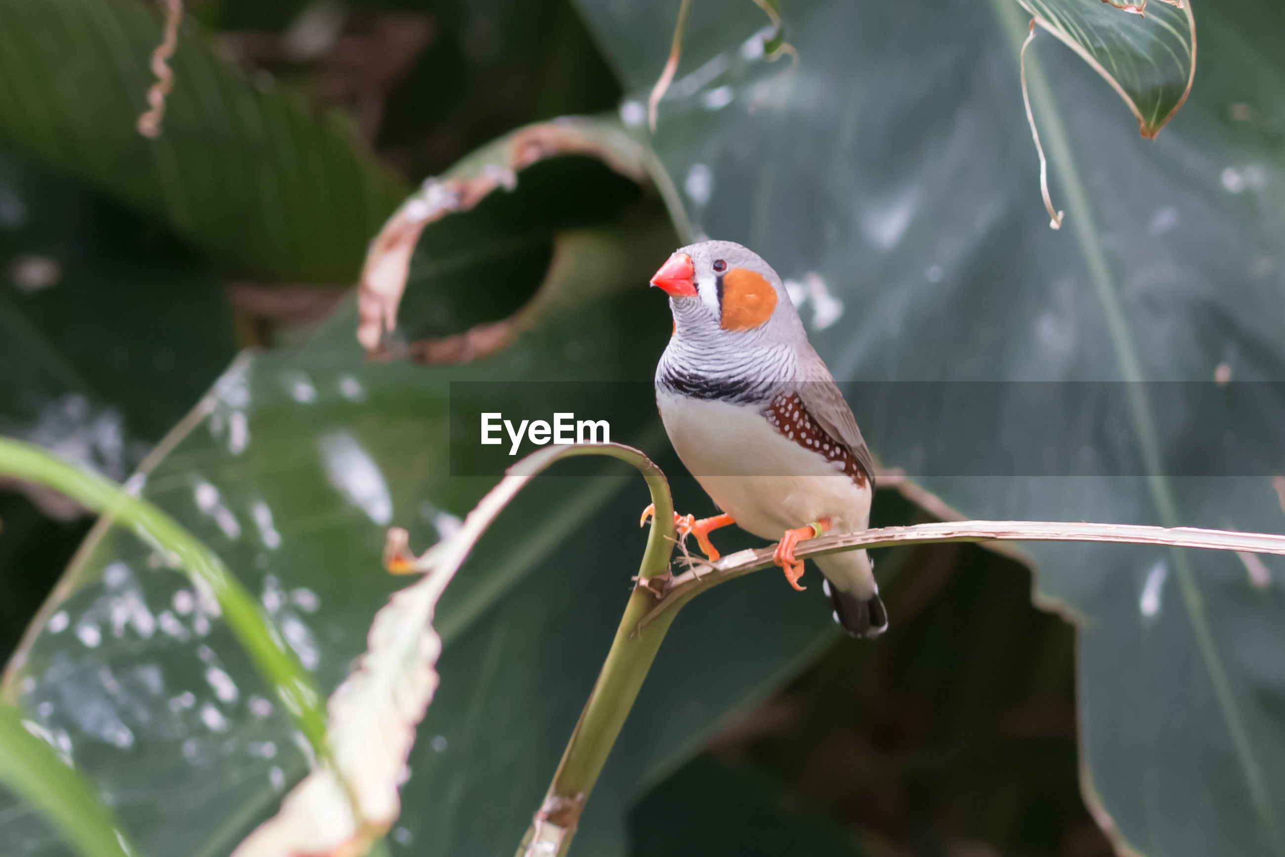 CLOSE-UP OF SPARROW PERCHING ON LEAF