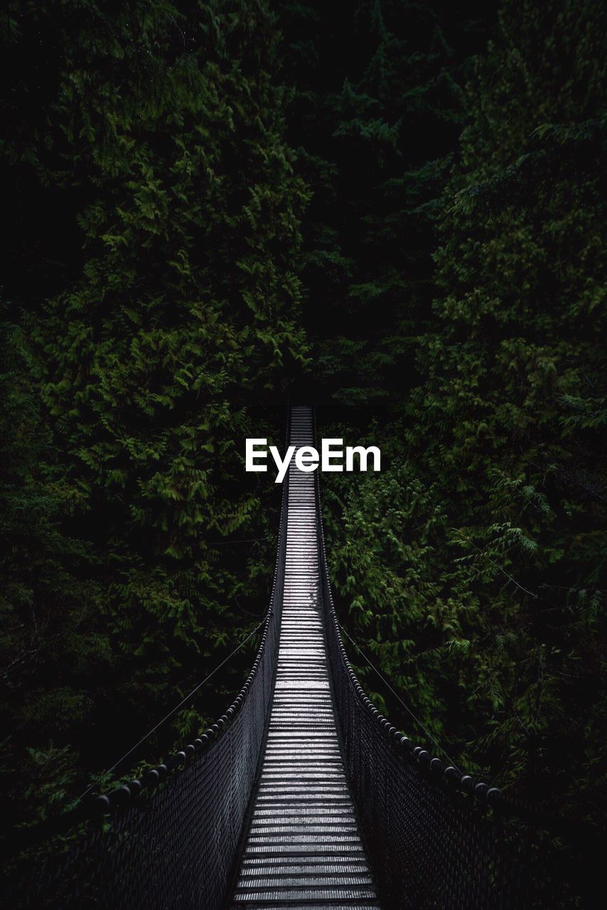 plant, tree, the way forward, direction, forest, land, nature, tranquility, no people, connection, beauty in nature, bridge, growth, foliage, green color, footbridge, lush foliage, tranquil scene, built structure, day, diminishing perspective, outdoors, bridge - man made structure, long