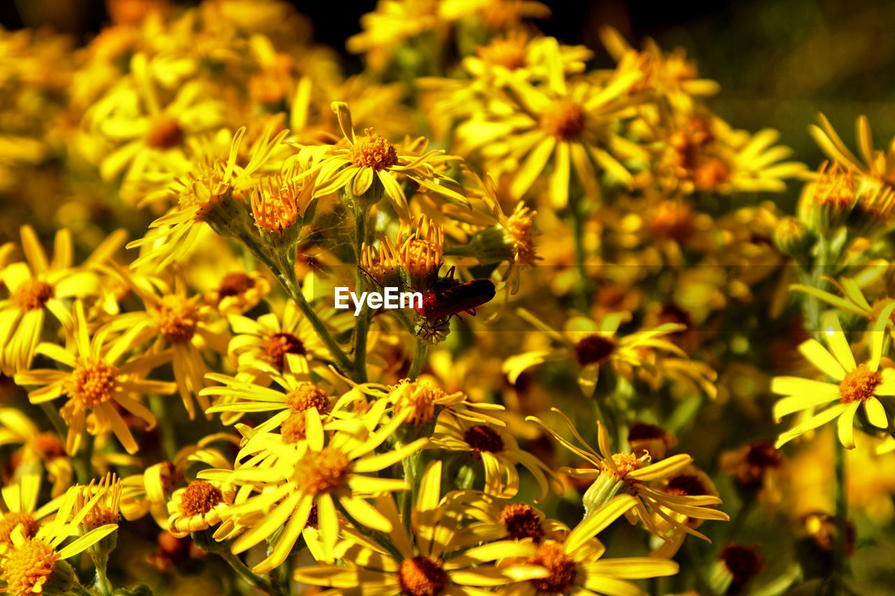 flowering plant, flower, invertebrate, insect, one animal, plant, growth, animals in the wild, animal themes, freshness, fragility, animal wildlife, animal, beauty in nature, vulnerability, petal, flower head, bee, close-up, nature, pollination, no people, pollen, outdoors