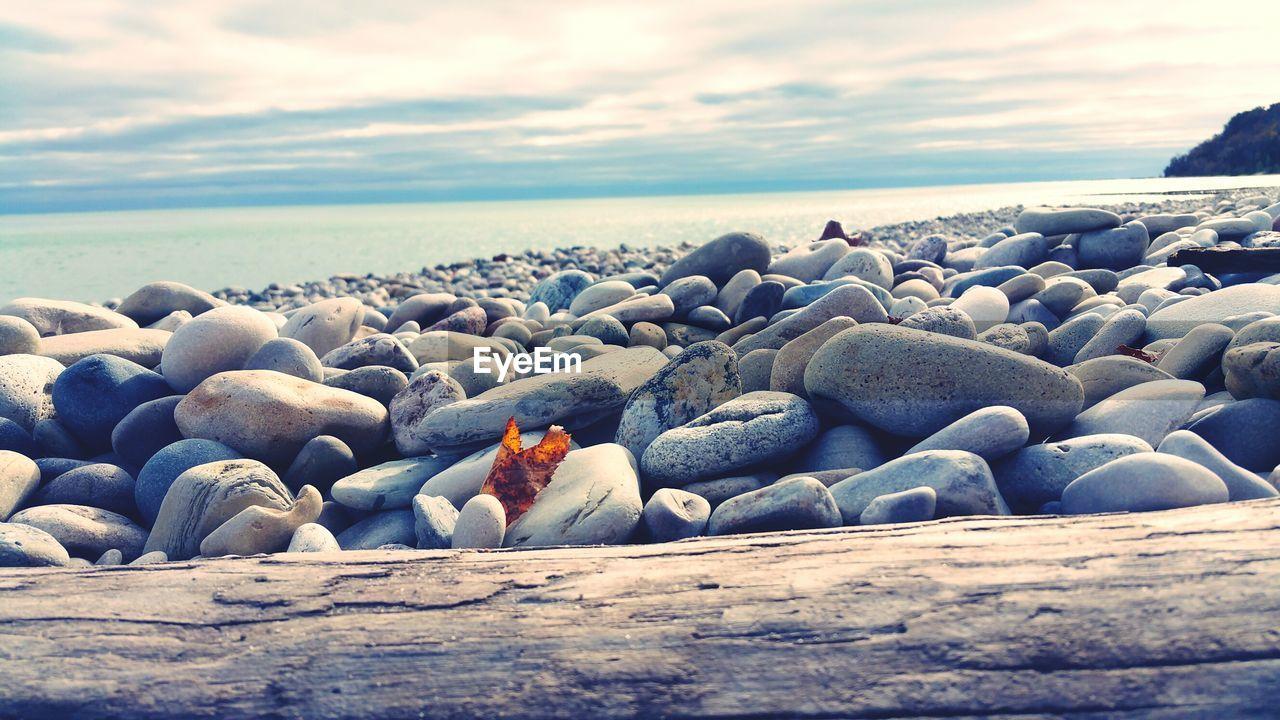 sea, water, sky, beach, rock, horizon over water, nature, cloud - sky, land, horizon, beauty in nature, solid, no people, animal themes, bird, rock - object, scenics - nature, animal, animal wildlife, pebble