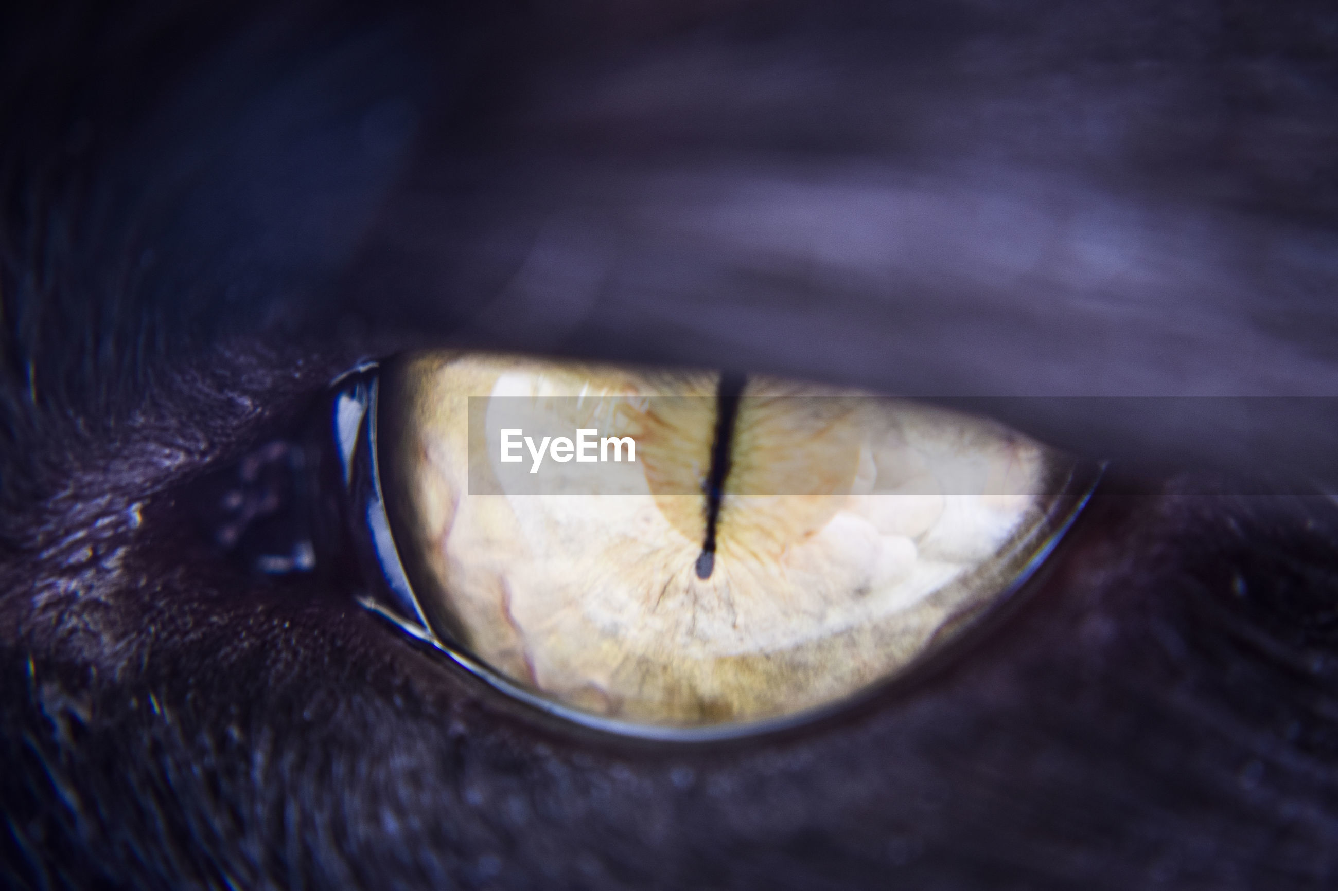 High angle view of cats eye