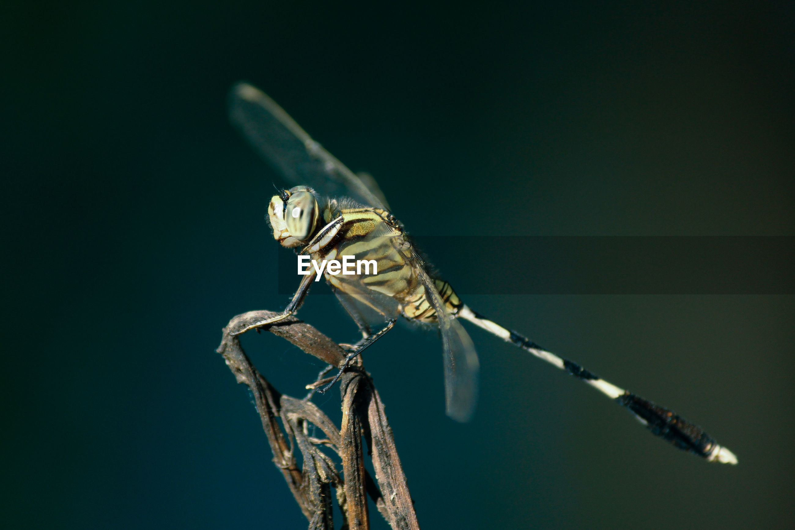 Close-up of damselfly on leaf against blue sky