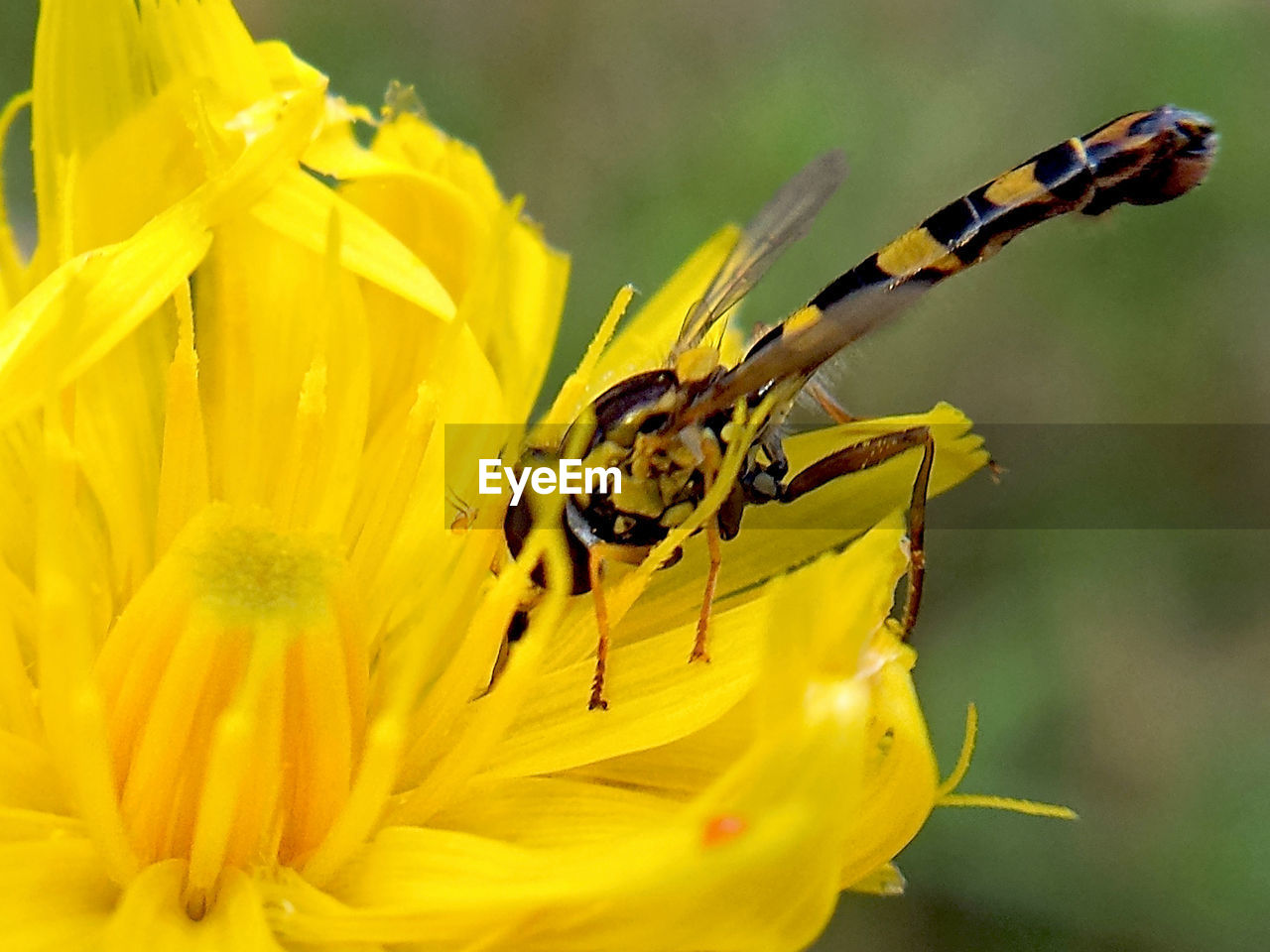 insect, flower, animals in the wild, animal themes, close-up, petal, yellow, nature, fragility, no people, plant, outdoors, animal wildlife, one animal, day, focus on foreground, freshness, beauty in nature, flower head