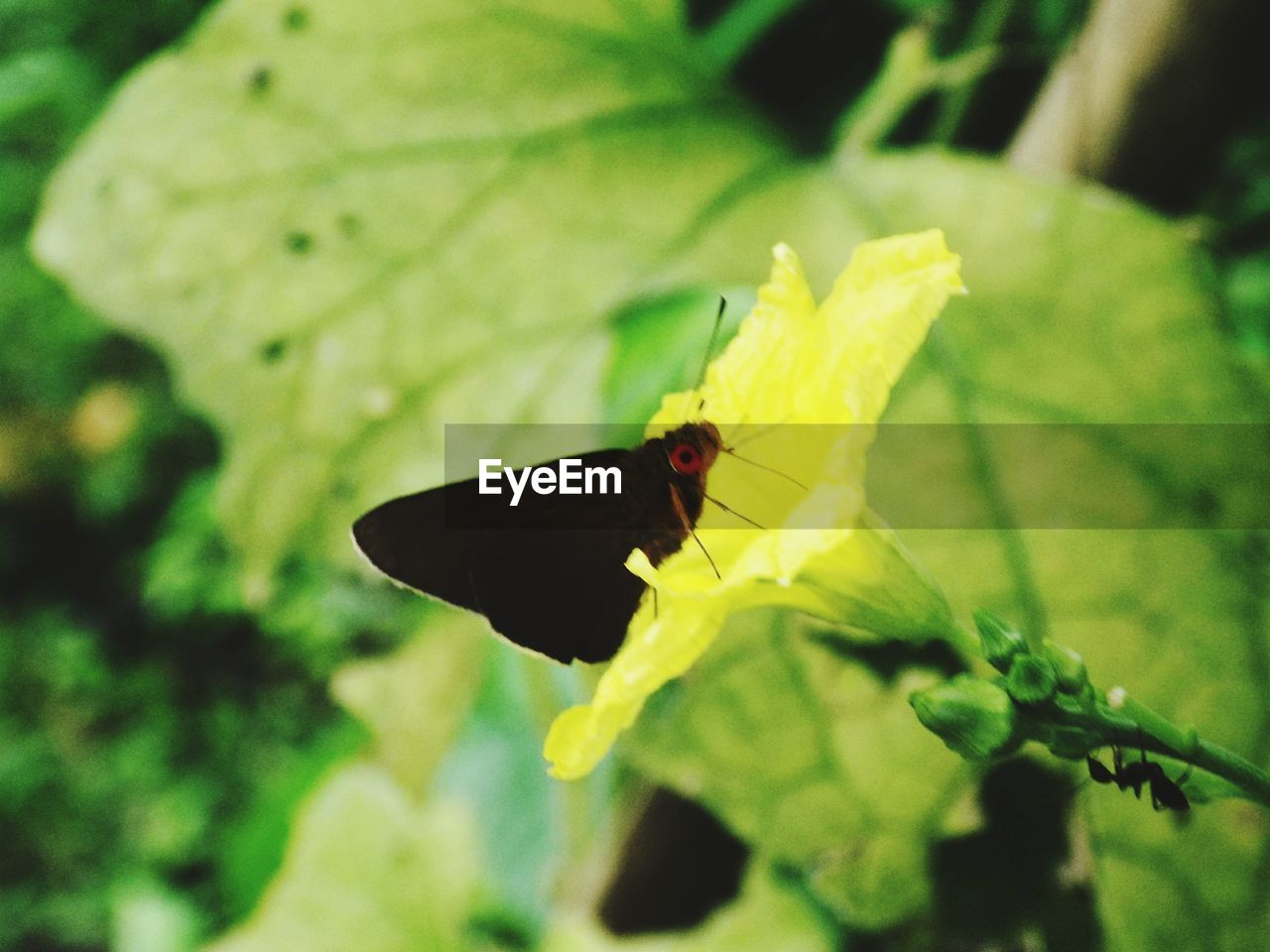 animal, leaf, animal themes, plant part, animal wildlife, one animal, insect, invertebrate, animals in the wild, close-up, nature, plant, green color, no people, day, focus on foreground, beauty in nature, yellow, selective focus, outdoors, animal wing, butterfly, butterfly - insect
