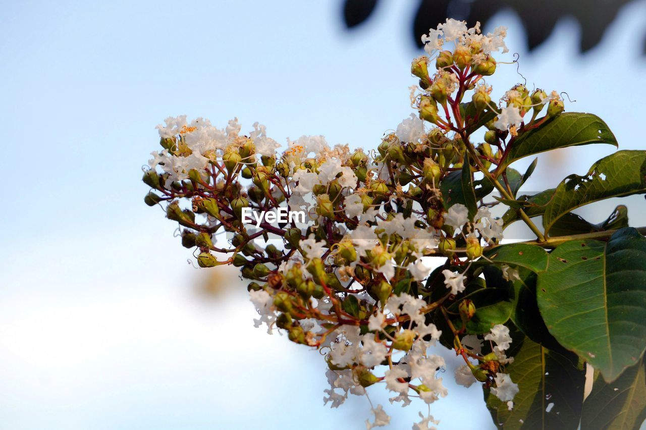 flower, beauty in nature, growth, fragility, nature, freshness, blossom, no people, petal, leaf, springtime, tree, low angle view, plant, day, branch, scented, outdoors, blooming, close-up, flower head, sky