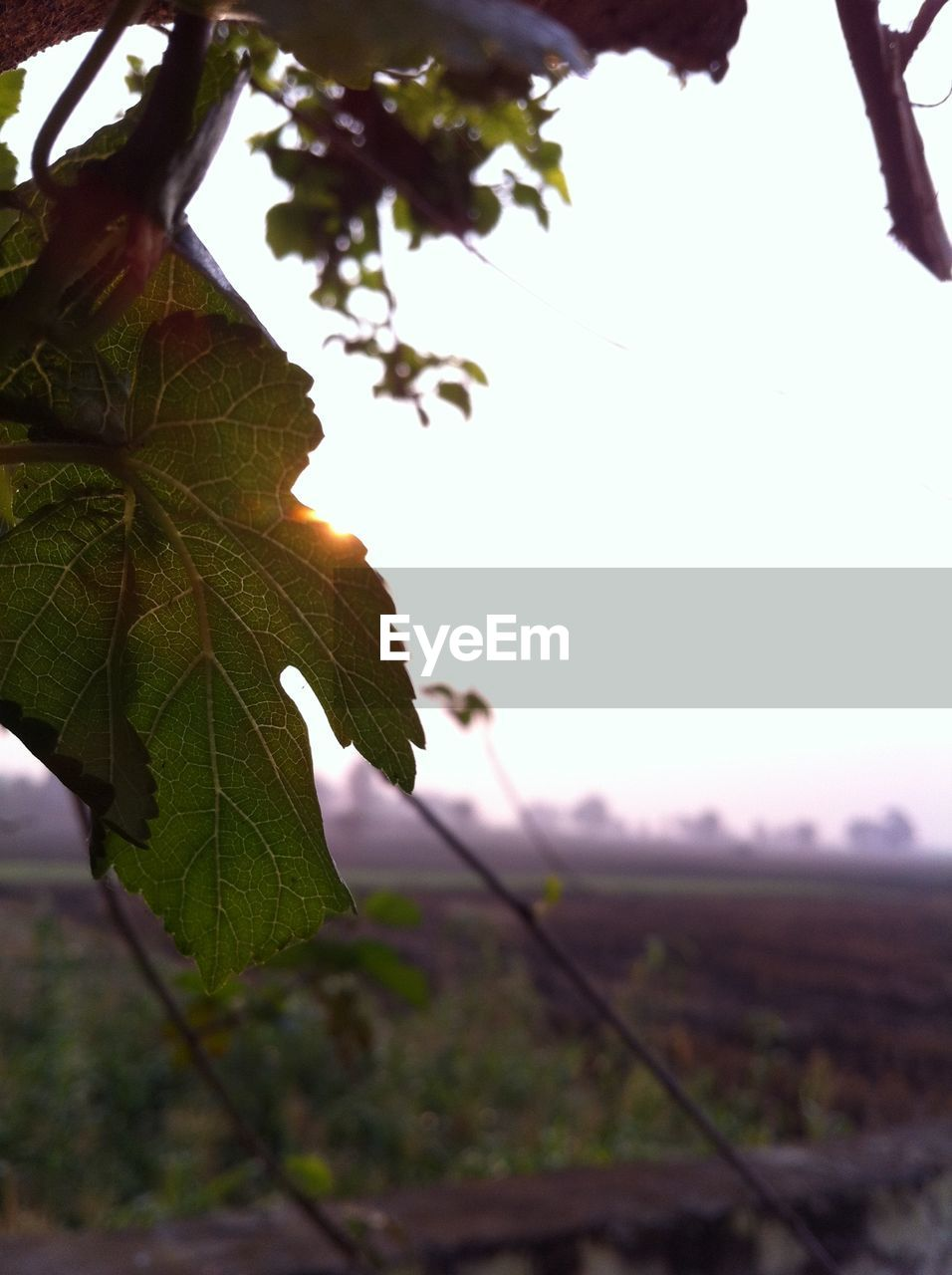 leaf, plant, plant part, growth, nature, focus on foreground, close-up, beauty in nature, tree, no people, day, sky, outdoors, selective focus, land, green color, landscape, field, tranquility, environment, leaves