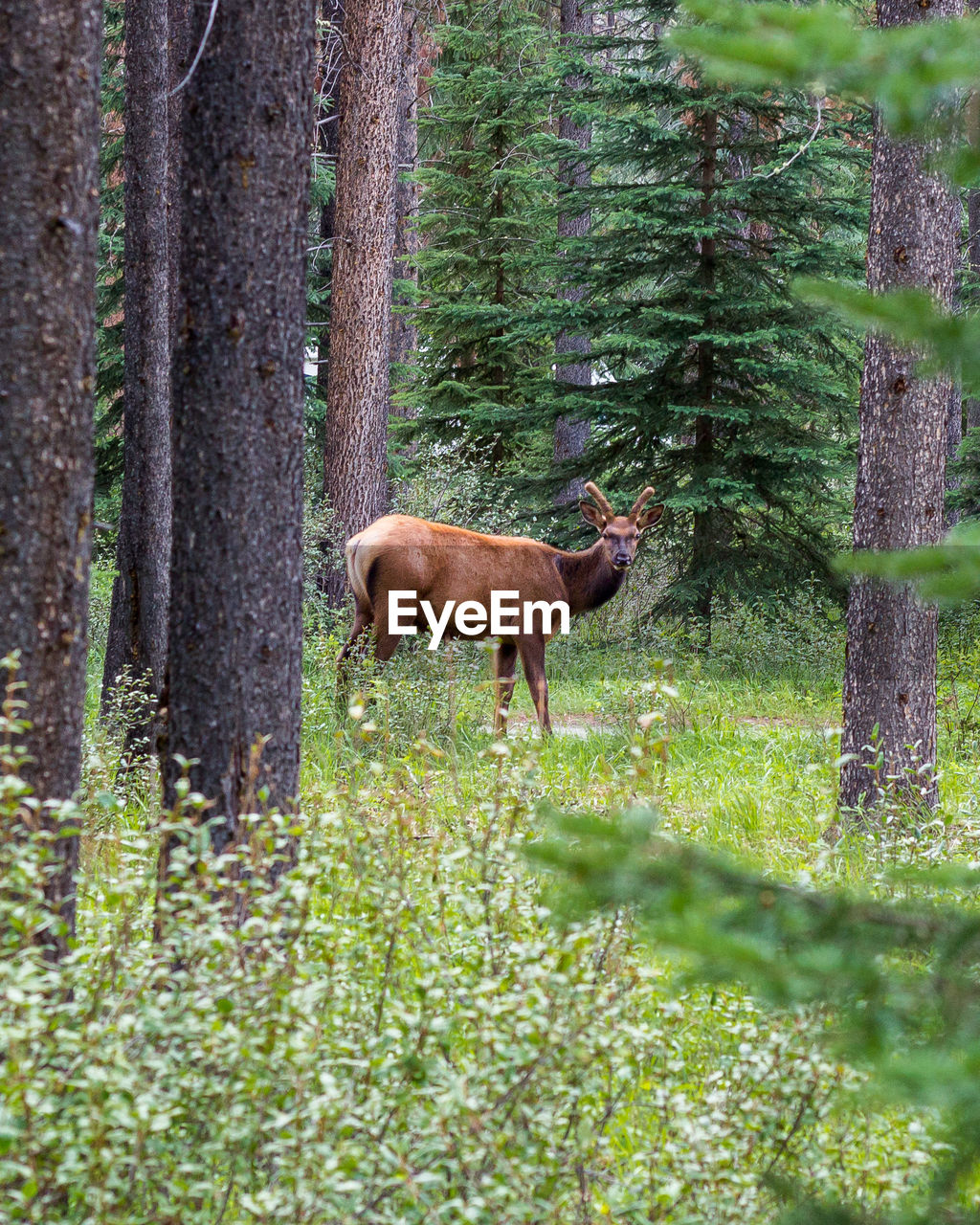 Side view of deer in forest