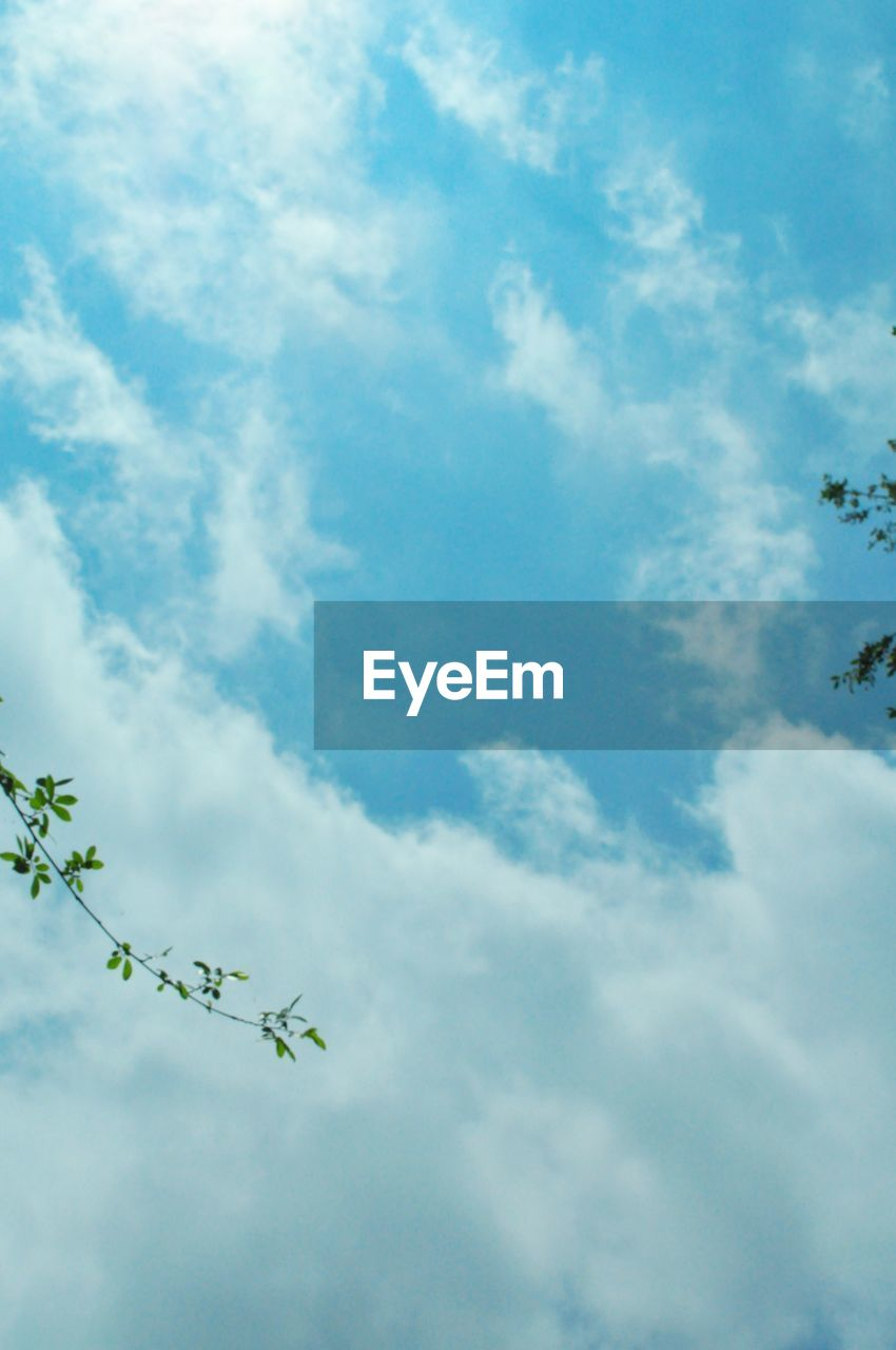 cloud - sky, sky, low angle view, nature, day, no people, beauty in nature, outdoors, plant, blue, tranquility, growth, sunlight, animal wildlife, animal themes, animal, green color, scenics - nature, animals in the wild, tree