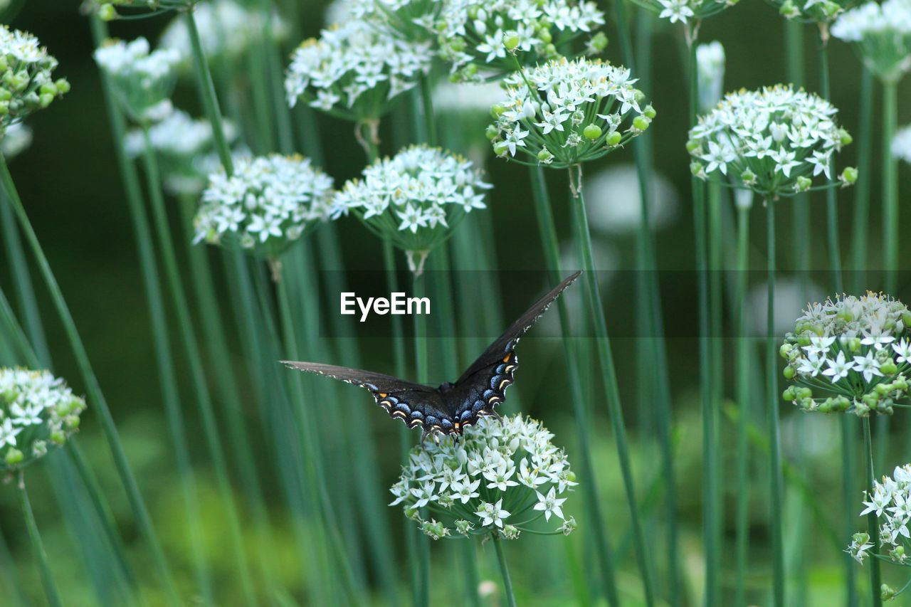 flower, flowering plant, plant, beauty in nature, animal themes, vulnerability, fragility, growth, animal, freshness, one animal, nature, animal wildlife, animals in the wild, green color, no people, flower head, day, insect, close-up, animal wing, outdoors, purple, pollination, butterfly - insect