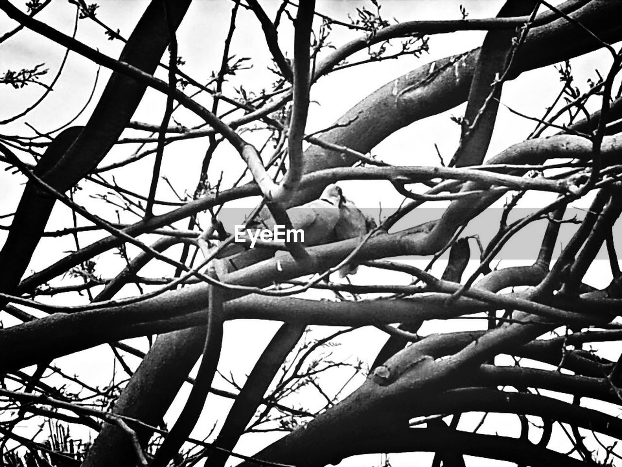 branch, tree, low angle view, day, growth, nature, no people, outdoors, beauty in nature, bare tree, sky, close-up, flower