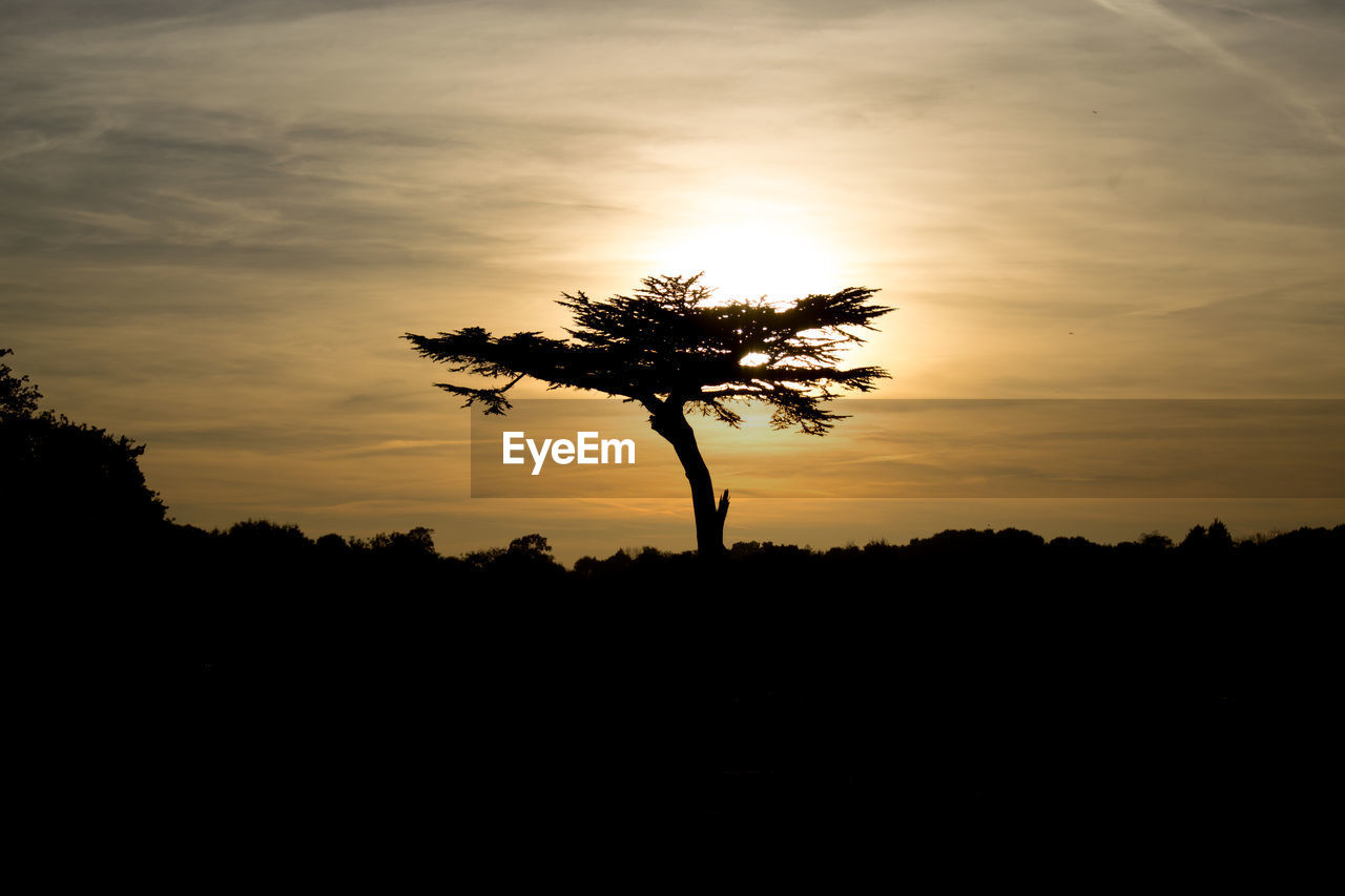 SILHOUETTE OF TREE AGAINST SKY DURING SUNSET