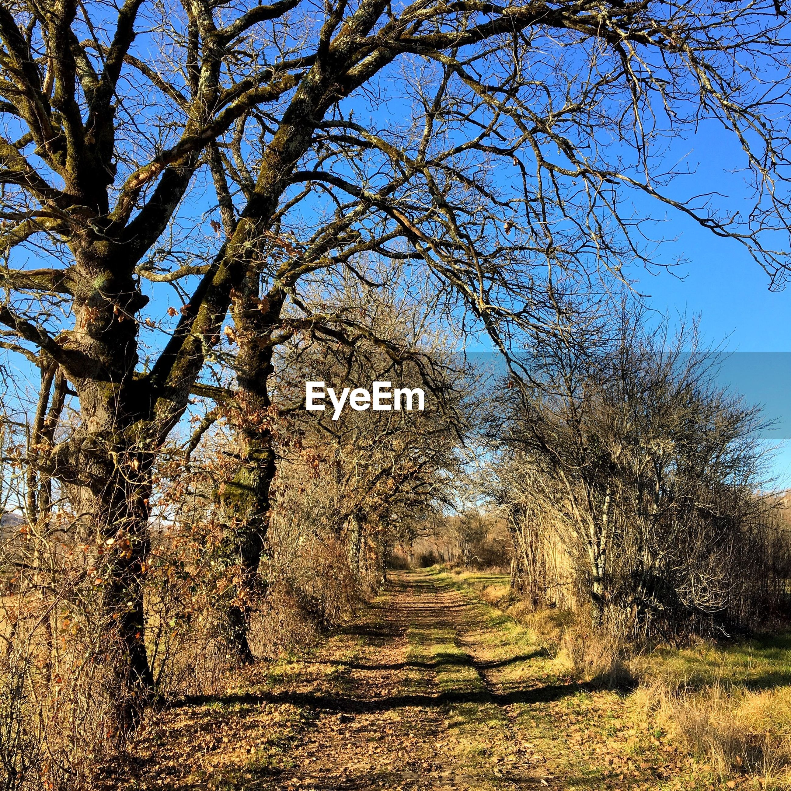 tree, the way forward, tranquility, growth, nature, branch, sky, tranquil scene, diminishing perspective, clear sky, landscape, day, field, beauty in nature, sunlight, bare tree, scenics, outdoors, vanishing point, dirt road