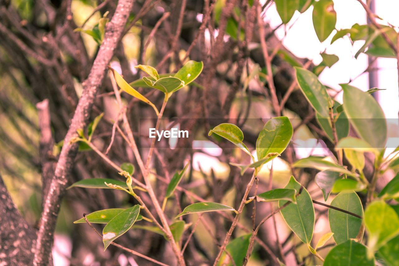 growth, plant, leaf, plant part, beauty in nature, nature, focus on foreground, close-up, day, no people, green color, selective focus, tree, outdoors, freshness, land, tranquility, plant stem, sunlight, flower