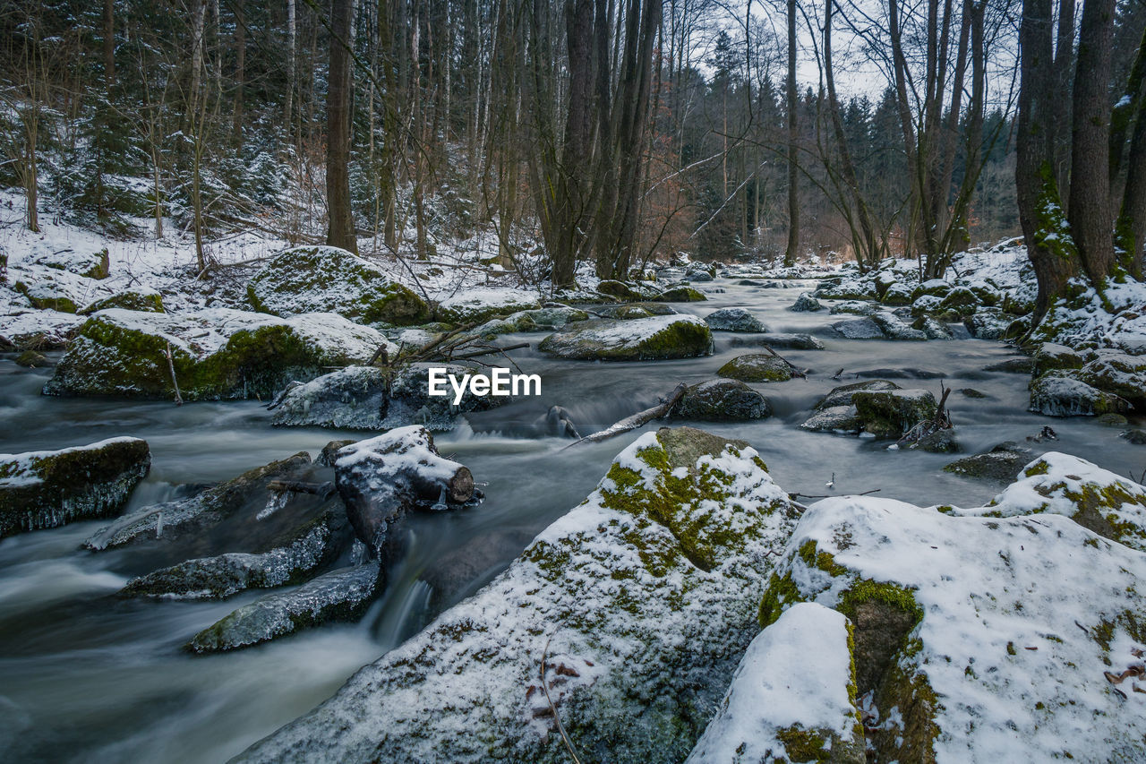 tree, water, forest, beauty in nature, flowing water, plant, scenics - nature, no people, long exposure, land, motion, nature, blurred motion, river, day, cold temperature, flowing, tranquility, stream - flowing water, outdoors, woodland