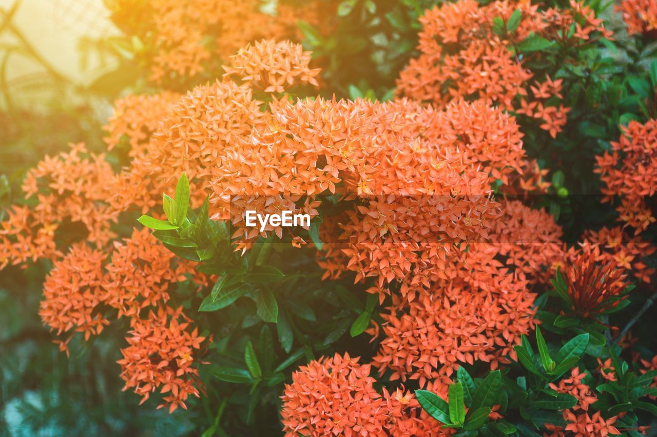 orange color, flower, growth, beauty in nature, plant, fragility, freshness, marigold, nature, day, focus on foreground, no people, leaf, blooming, flower head, outdoors, close-up