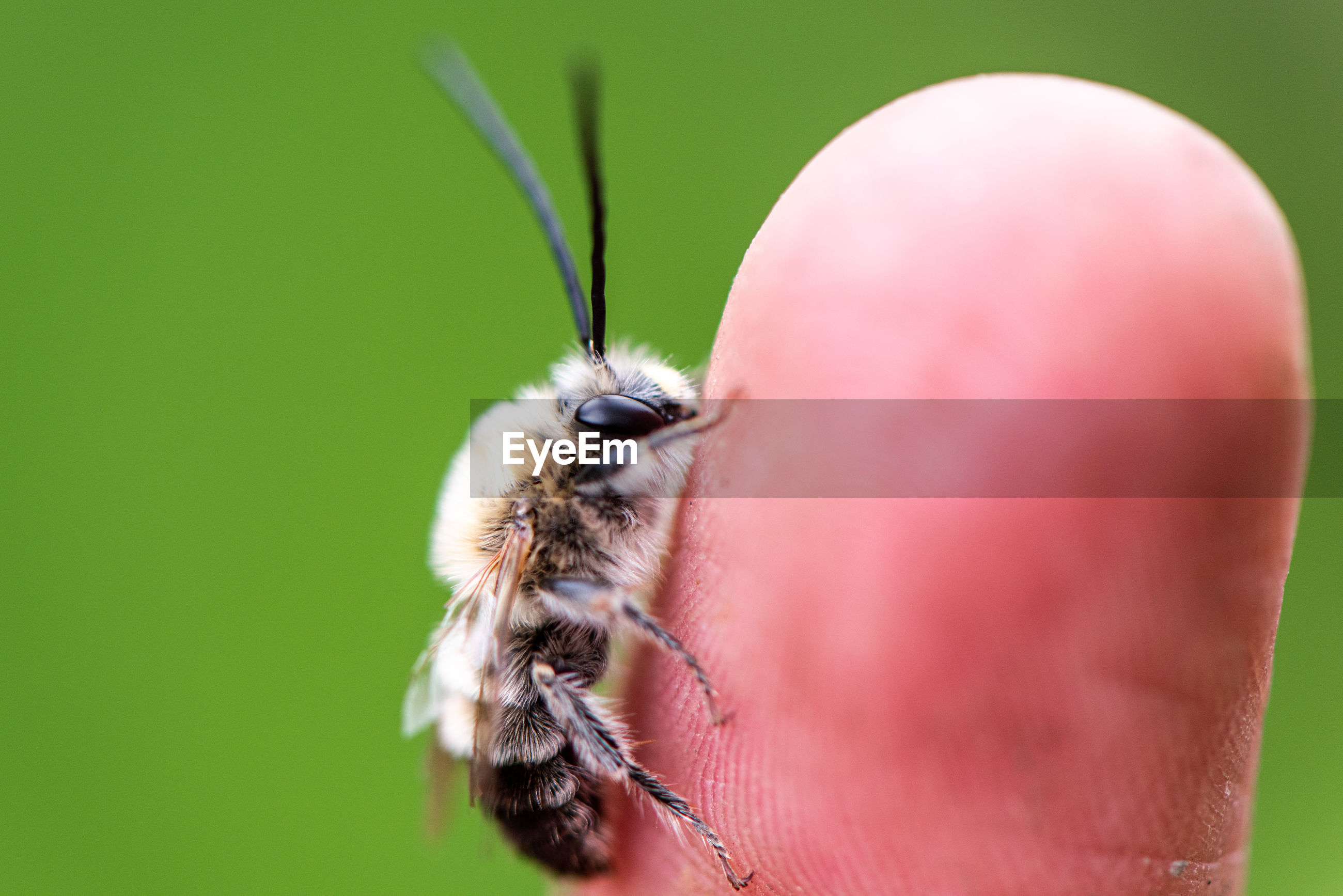 Close-up of bee on human finger