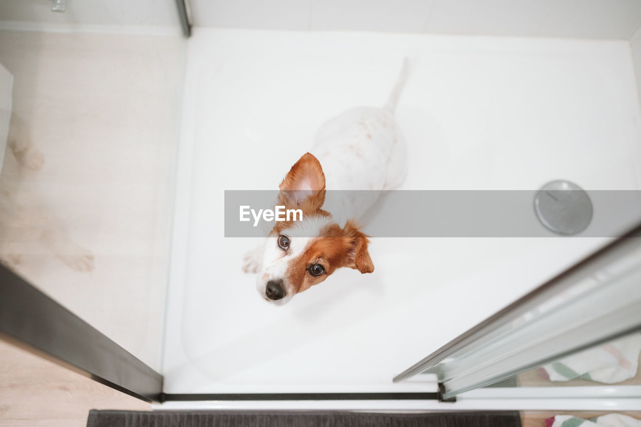 HIGH ANGLE VIEW OF DOG LOOKING AT TABLE