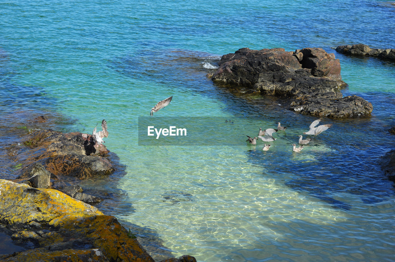 HIGH ANGLE VIEW OF BIRDS SWIMMING ON ROCK