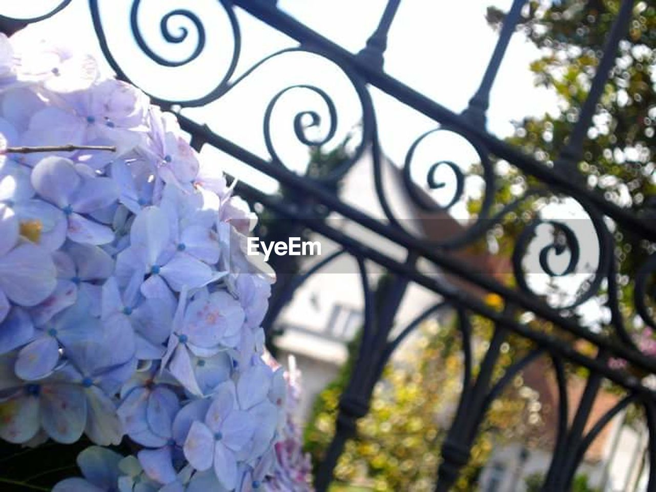 day, close-up, no people, outdoors, flower, tree, clock