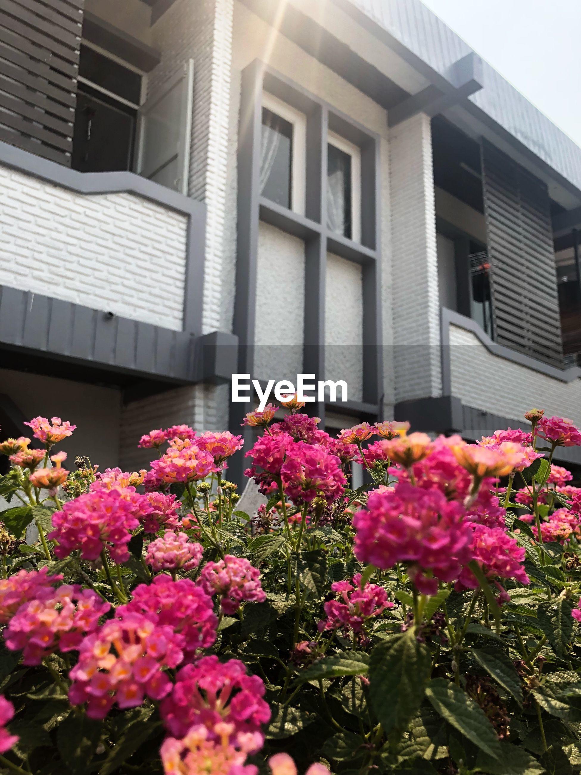 PINK FLOWERING PLANTS BY WINDOW OF BUILDING