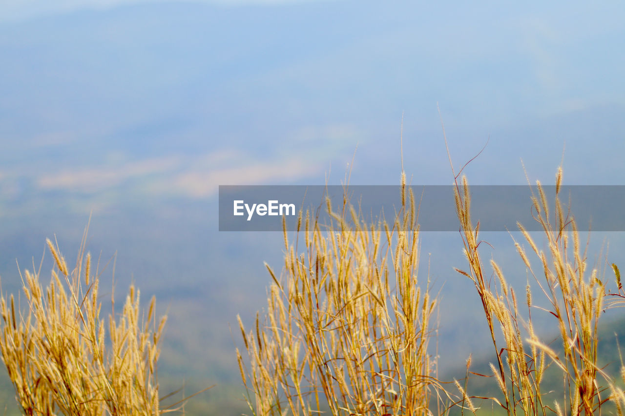 nature, growth, tranquility, no people, outdoors, plant, day, tranquil scene, beauty in nature, scenics, sky, close-up