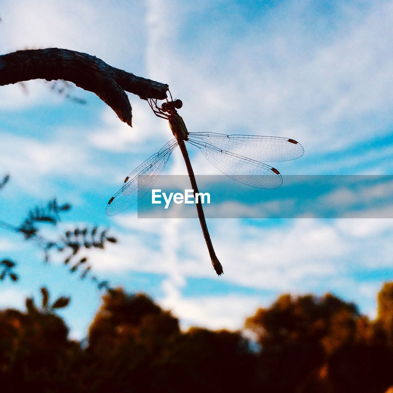 sky, cloud - sky, animals in the wild, focus on foreground, close-up, nature, animal, animal wildlife, animal themes, insect, invertebrate, no people, day, plant, animal wing, one animal, outdoors, beauty in nature, dragonfly, low angle view