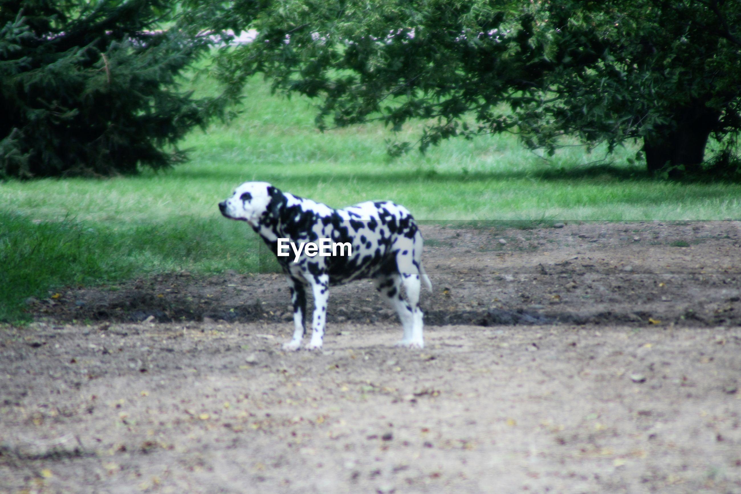 DOG STANDING ON GROUND