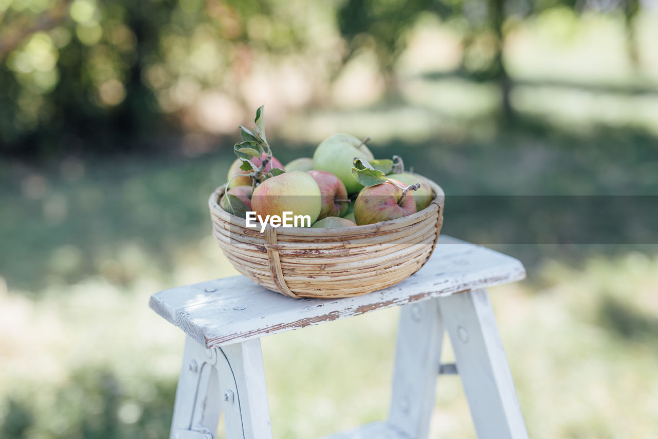 food, healthy eating, food and drink, wellbeing, fruit, freshness, container, basket, focus on foreground, day, apple - fruit, no people, agriculture, close-up, nature, still life, organic, outdoors, front or back yard, table
