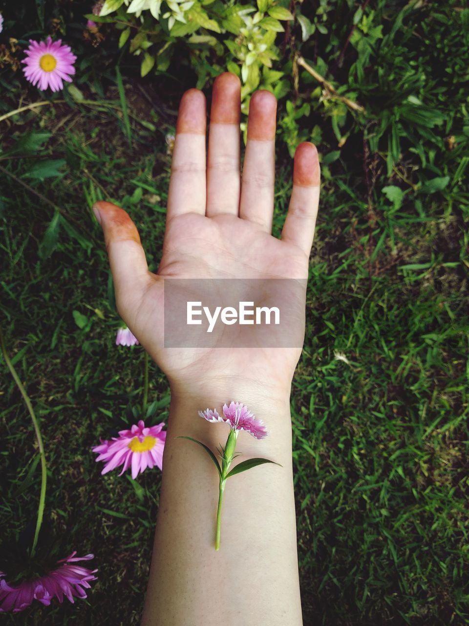 Cropped hand with flower over grassy field