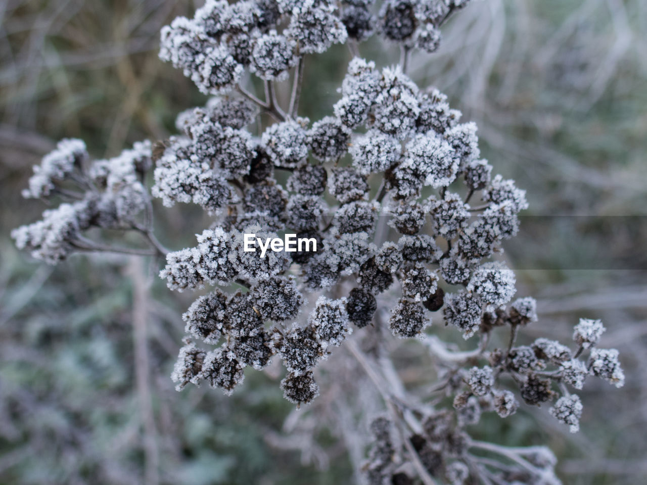 cold temperature, winter, snow, nature, white color, focus on foreground, no people, frozen, day, close-up, outdoors, beauty in nature, frost, tranquility, plant, fragility, growth, tree, snowflake, freshness