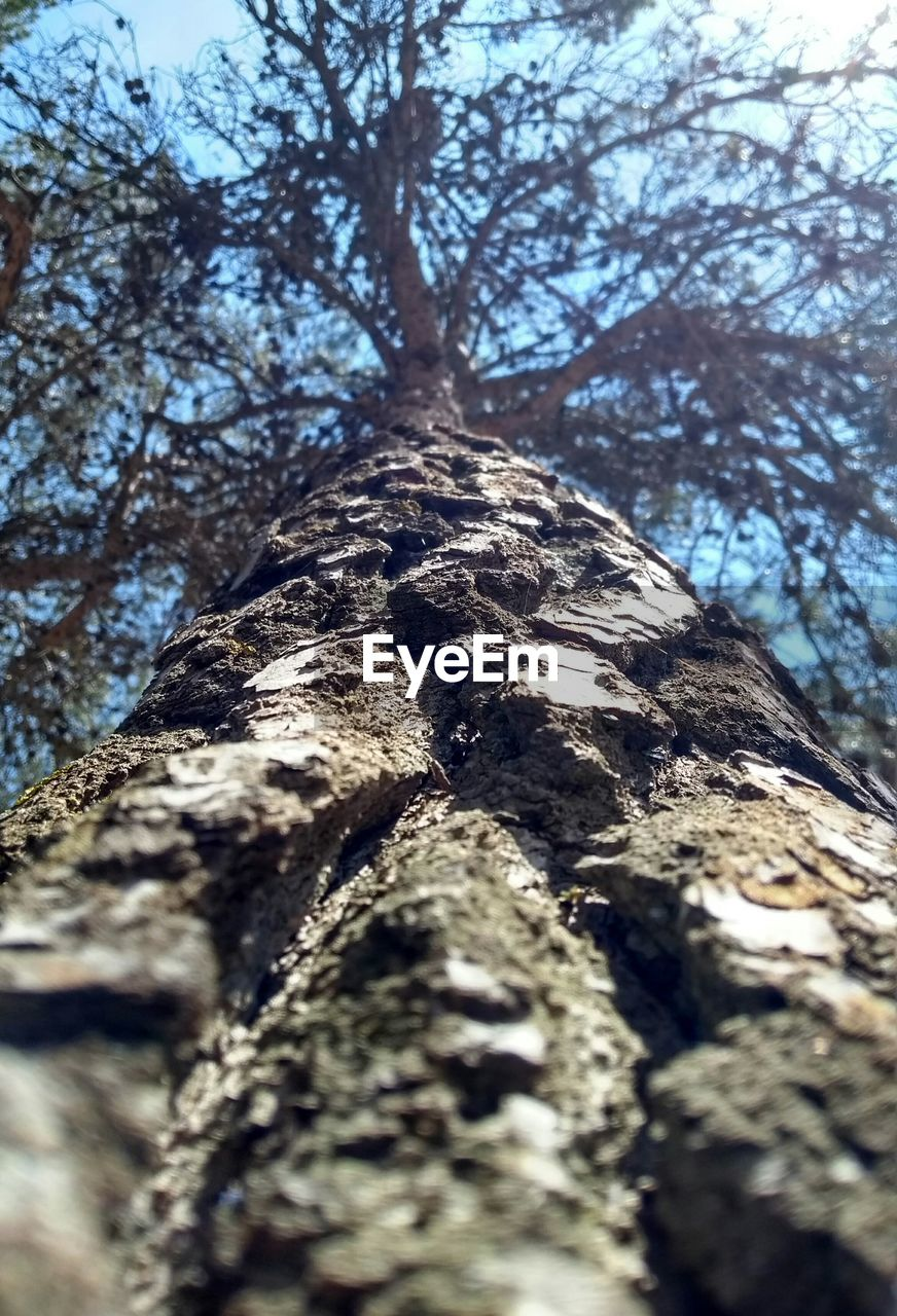 tree, tree trunk, low angle view, nature, day, rough, bark, textured, branch, outdoors, growth, no people, beauty in nature, tranquility, forest, close-up, sky