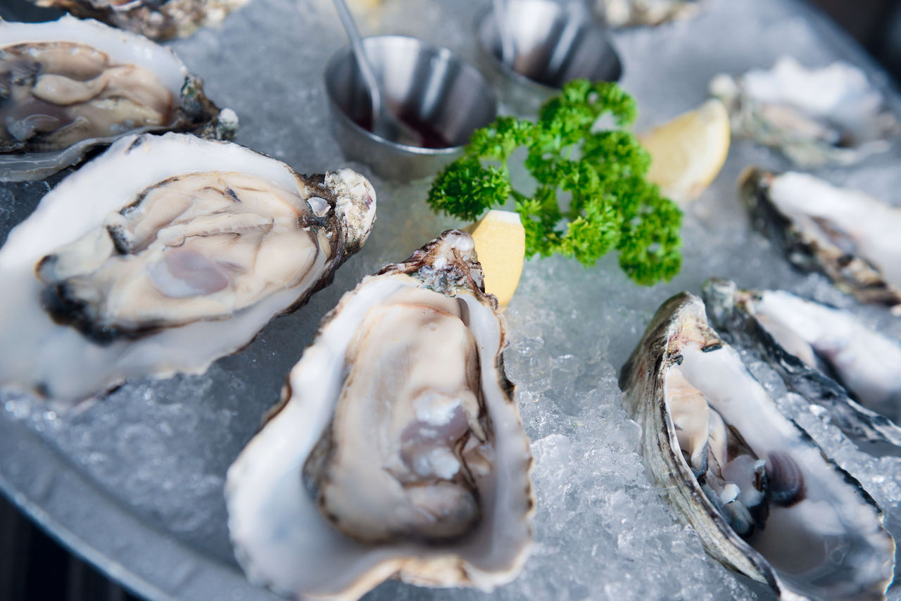 food and drink, food, seafood, freshness, animal, oyster, fish, healthy eating, selective focus, wellbeing, raw food, shell, still life, close-up, vertebrate, no people, animal shell, plate, ready-to-eat, ice