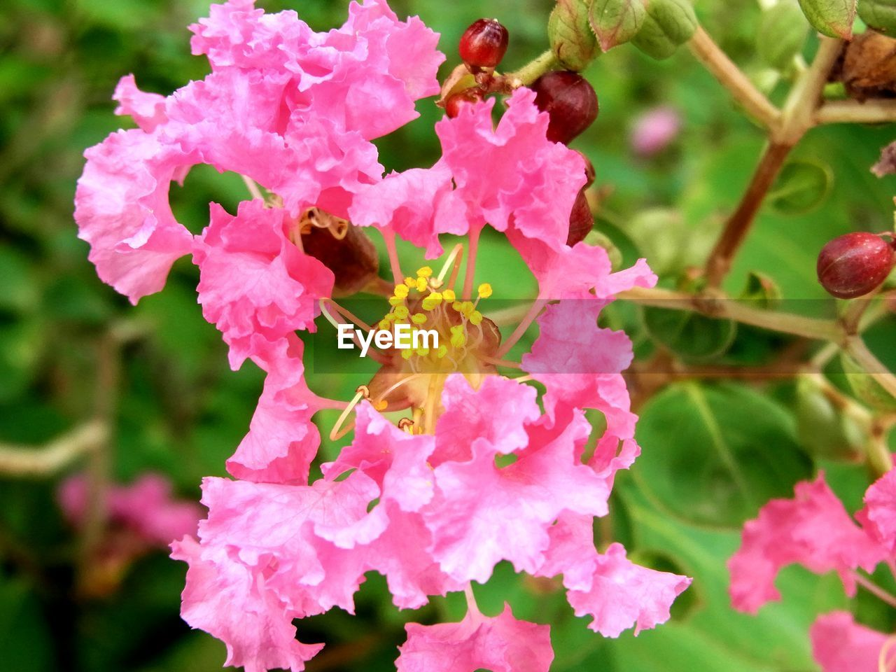 flowering plant, flower, plant, growth, beauty in nature, petal, fragility, freshness, close-up, vulnerability, animal, animal wildlife, flower head, animal themes, animals in the wild, insect, invertebrate, pink color, inflorescence, one animal, no people, pollen, pollination, outdoors