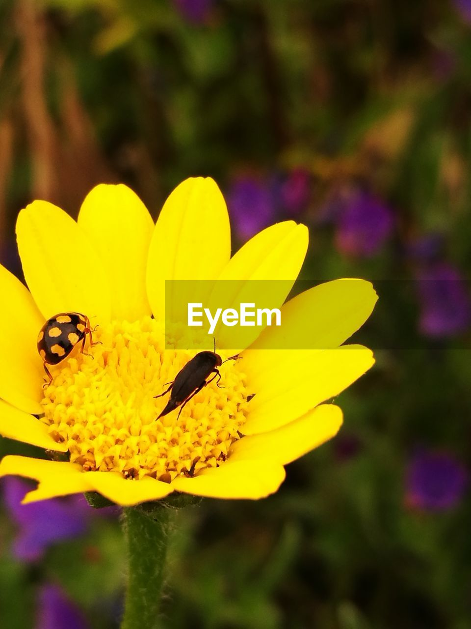 yellow, flower, insect, petal, animal themes, nature, animals in the wild, beauty in nature, fragility, bee, growth, focus on foreground, plant, outdoors, one animal, flower head, animal wildlife, day, no people, close-up, pollination, freshness, blooming, buzzing