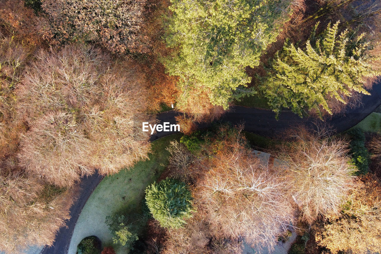 plant, tree, growth, nature, beauty in nature, no people, tranquility, day, land, high angle view, autumn, tranquil scene, outdoors, water, green color, forest, sunlight, scenics - nature, non-urban scene