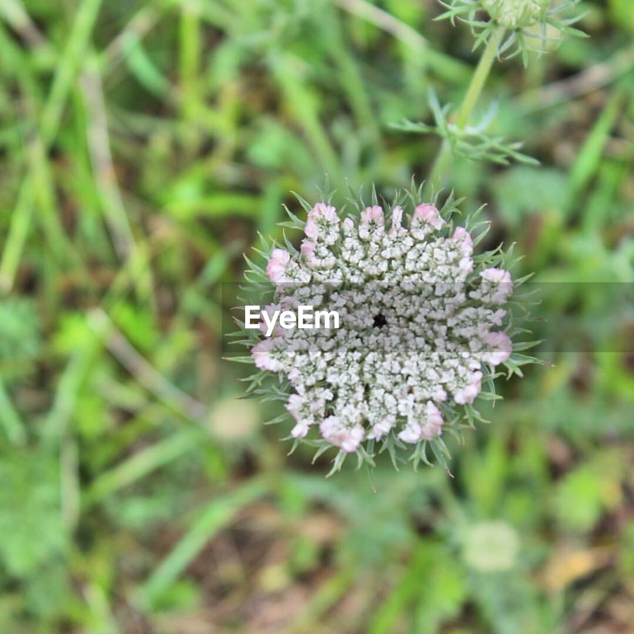flower, growth, nature, plant, beauty in nature, no people, blooming, outdoors, fragility, day, freshness, close-up, flower head