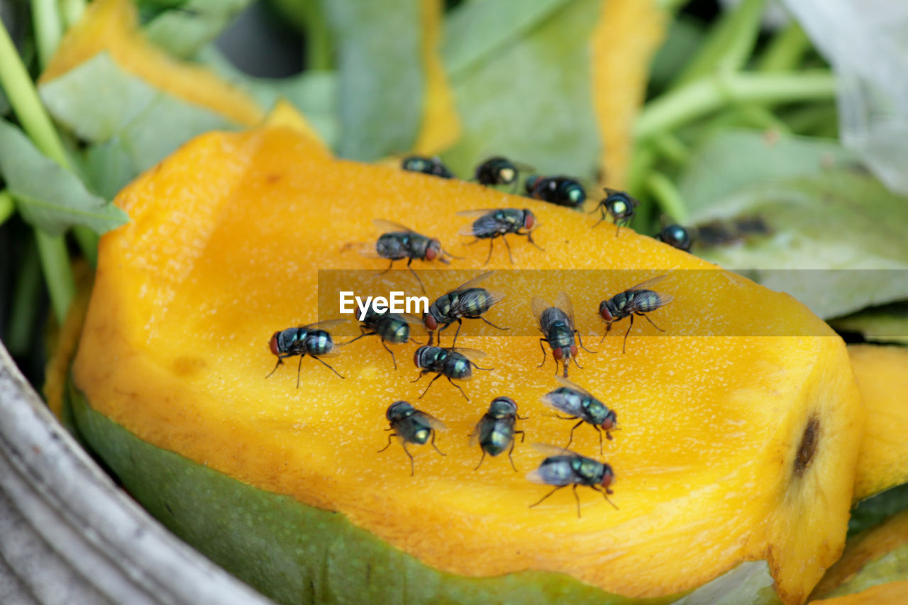yellow, food and drink, close-up, food, healthy eating, no people, freshness, wellbeing, fruit, day, focus on foreground, nature, leaf, plant part, plant, insect, high angle view, still life, growth, green color, ripe