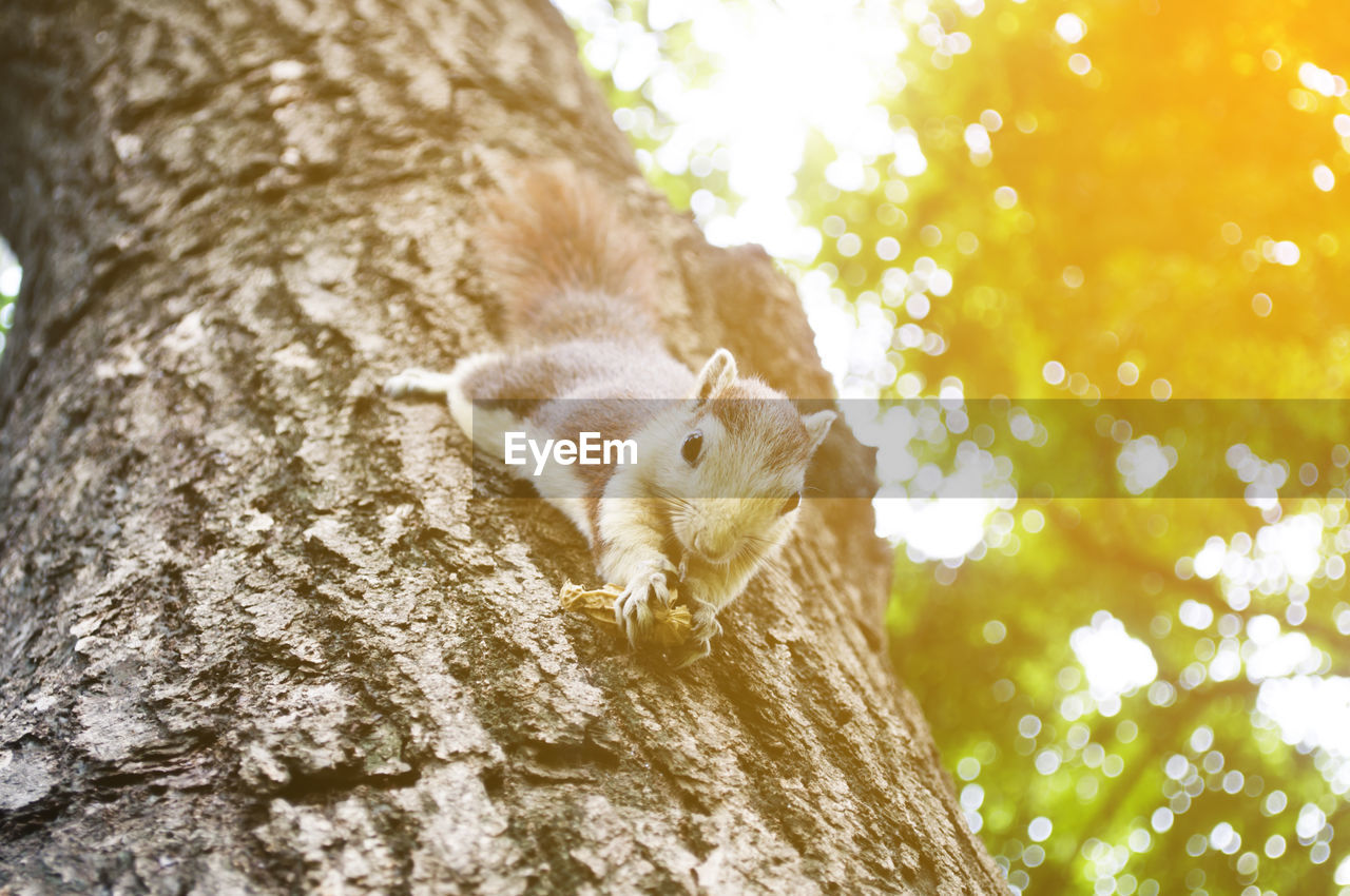 Low angle portrait of squirrel holding peanut shell on tree trunk
