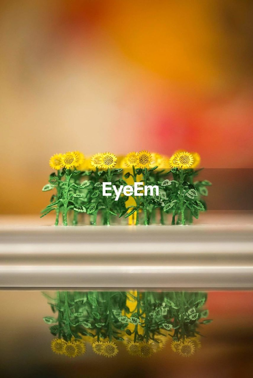 flower, close-up, freshness, plant, flowering plant, indoors, no people, yellow, nature, green color, beauty in nature, growth, vulnerability, selective focus, fragility, plant stem, food and drink, food, focus on foreground, plant part, flower pot