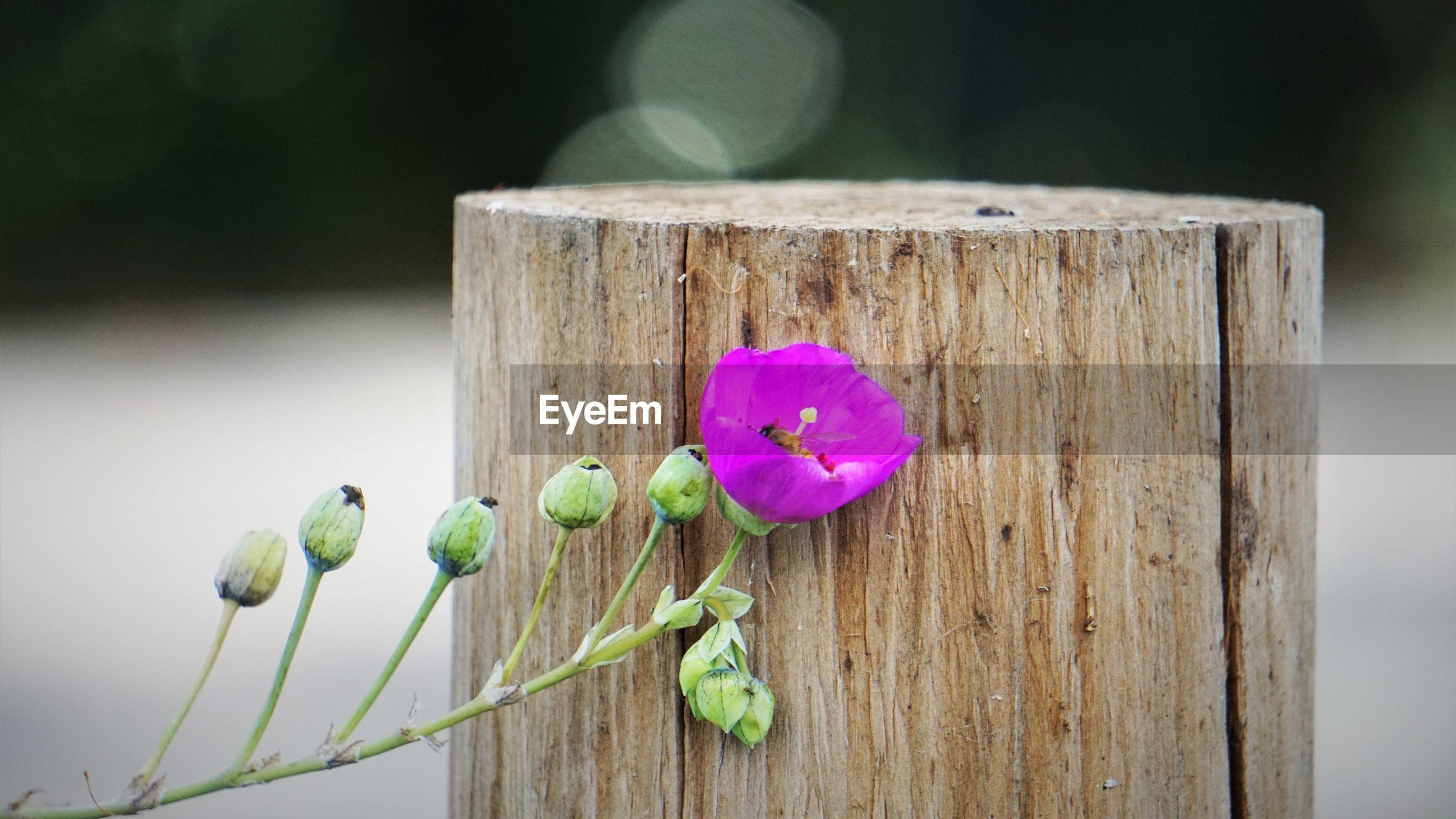Delicate yet fierce succulent flower